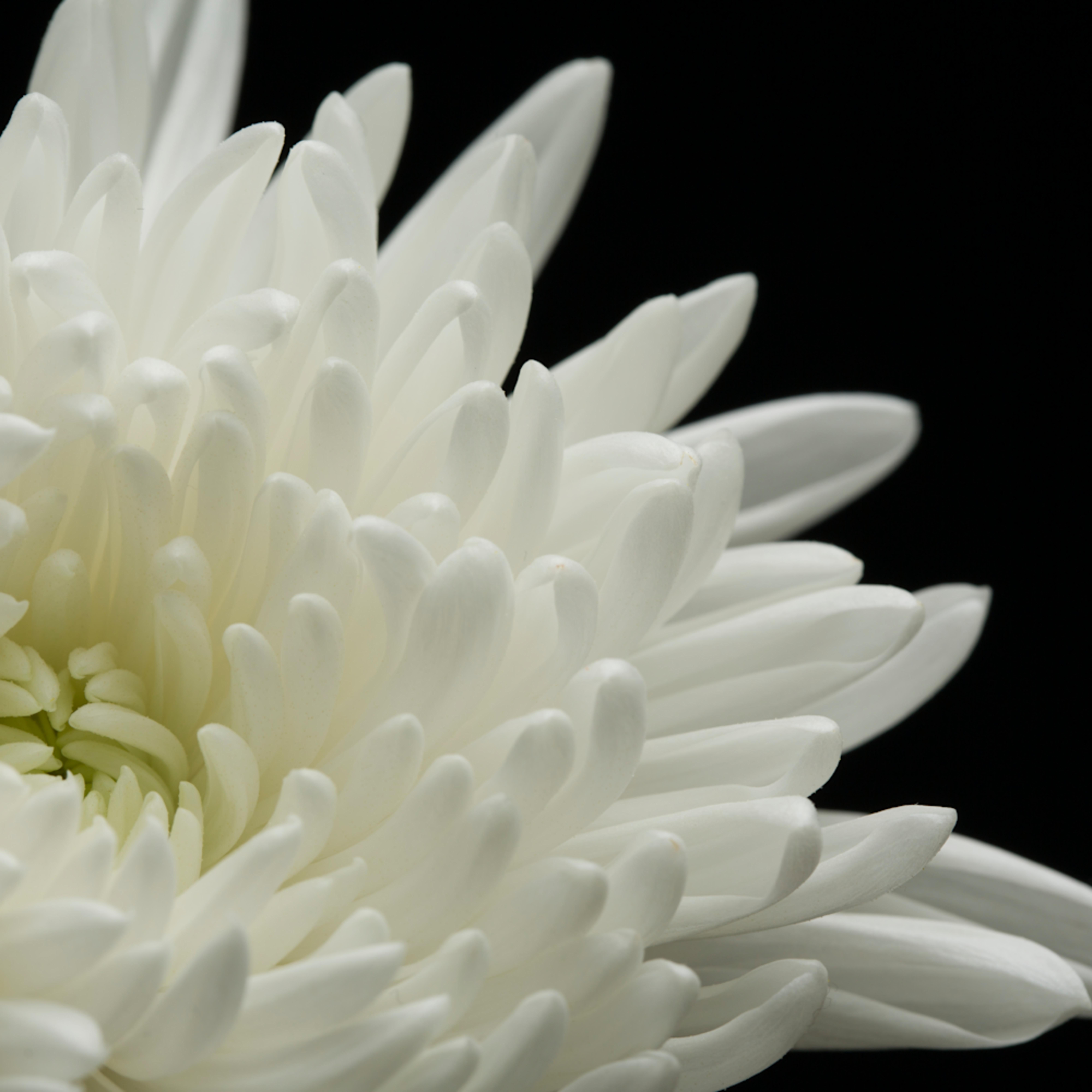 Mbp studio flowers 20120402 1353 2 ucce1q
