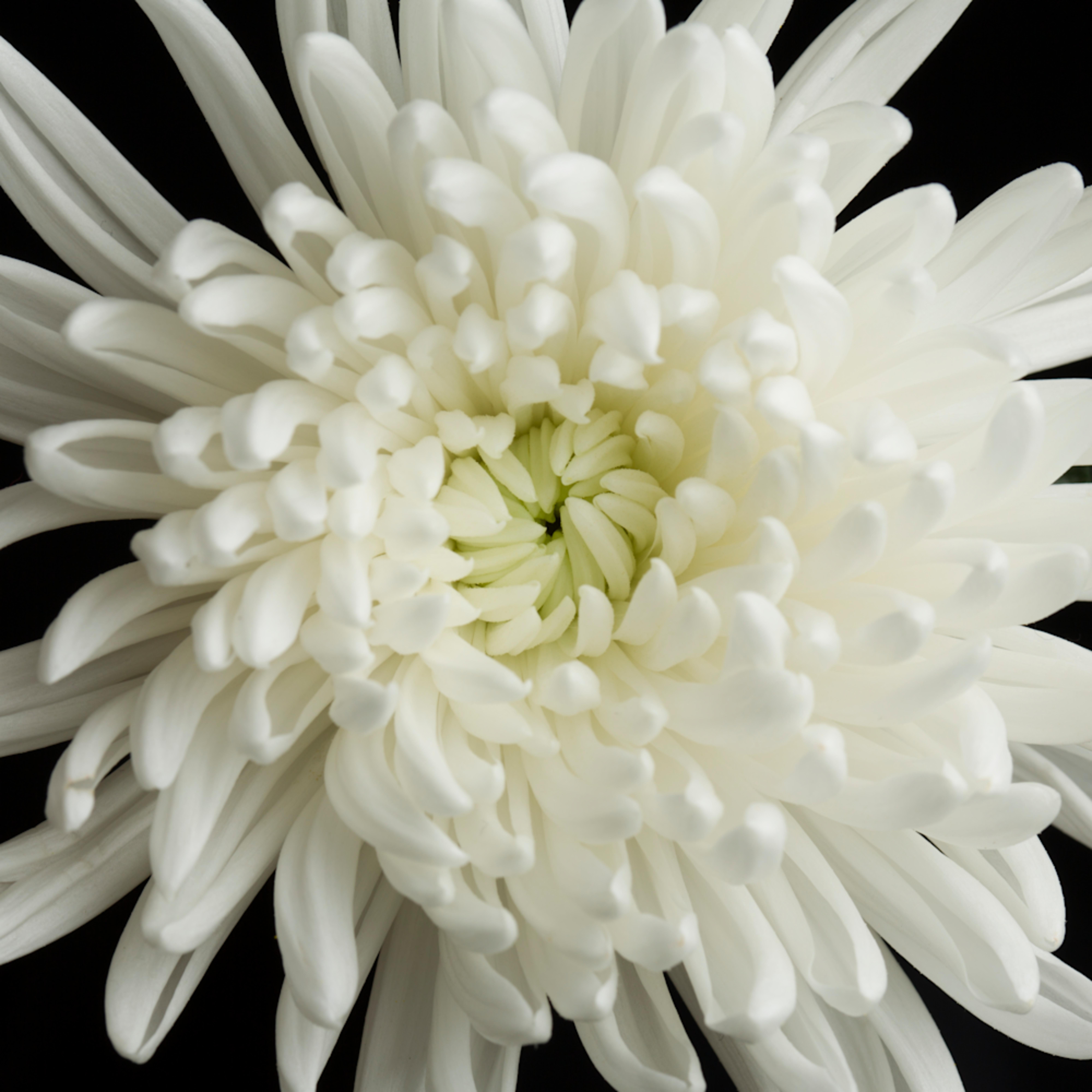 Mbp studio flowers 20120402 1330 2 tigix2