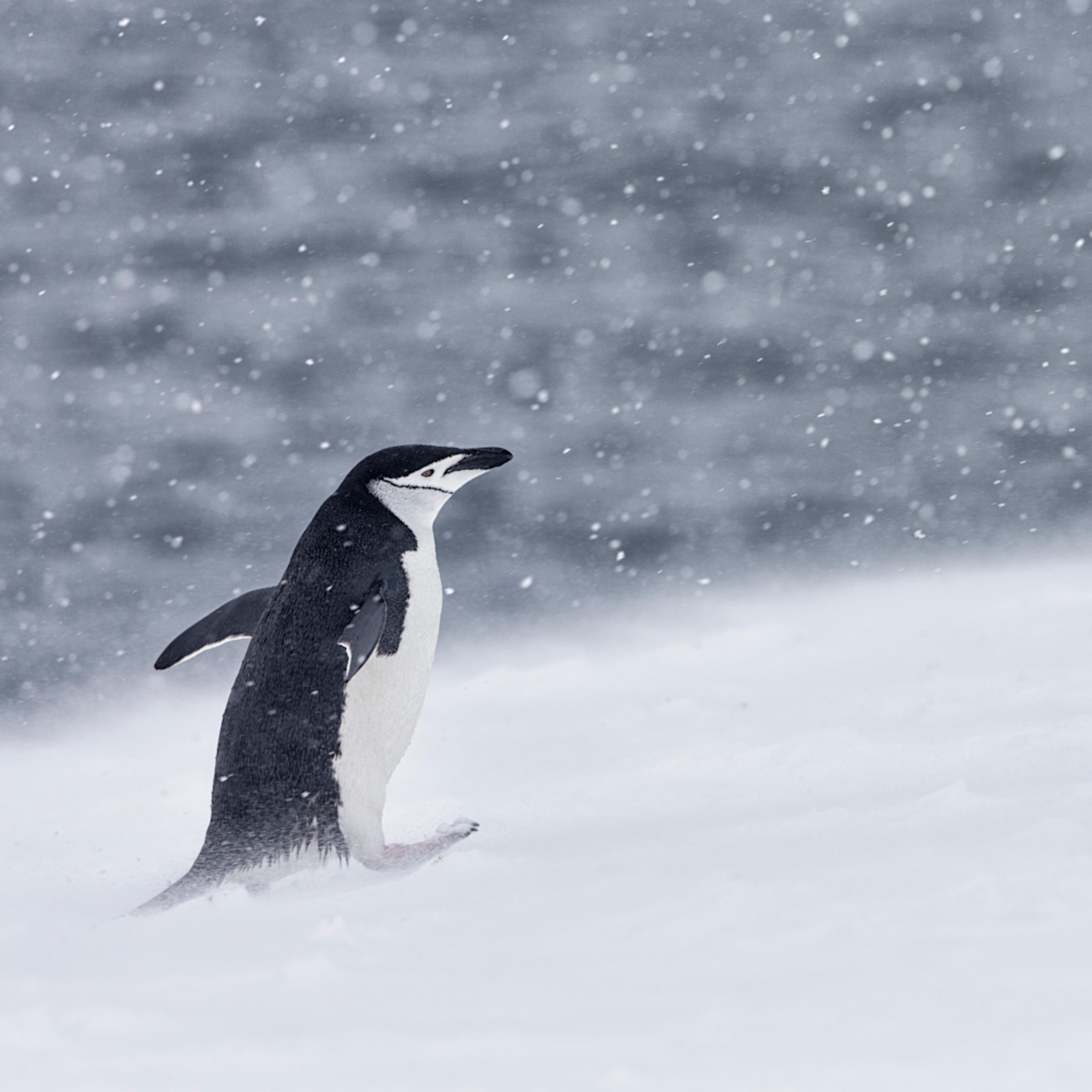 Mbp antarctica 20121129 6487 v0gfp9