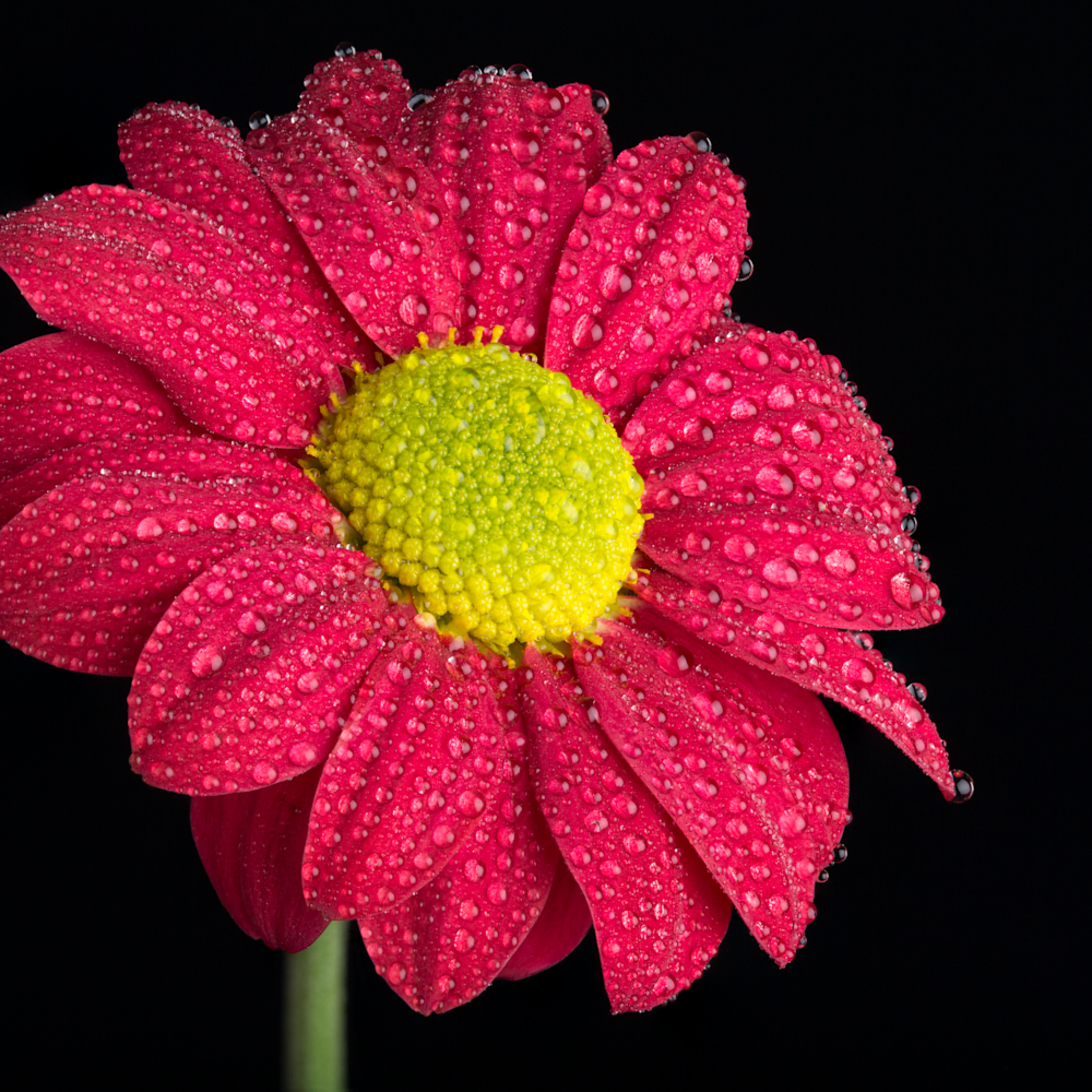 Mbp flower 20130423 96183 lpkhrb