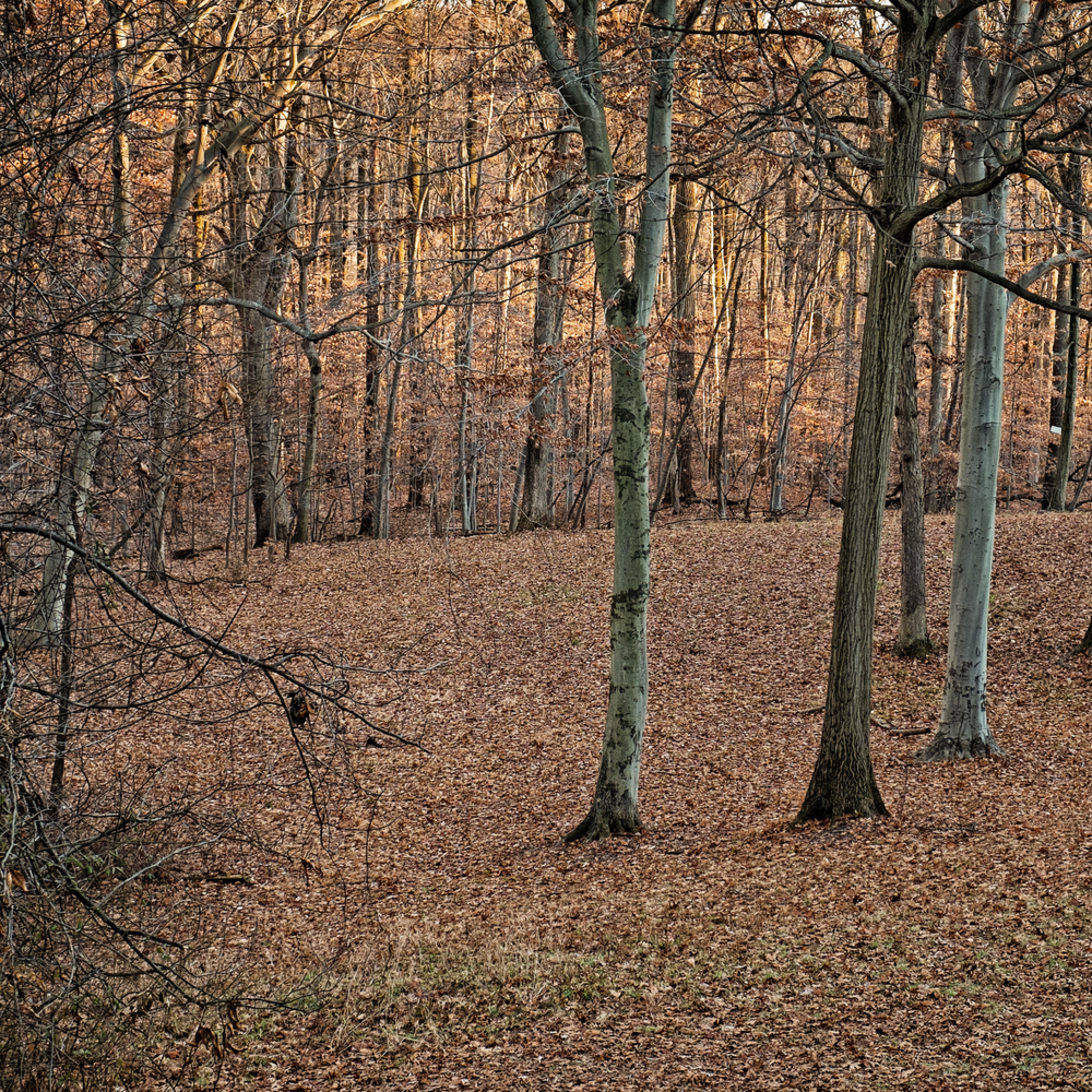 Behind greenwood 1713 hsmxae