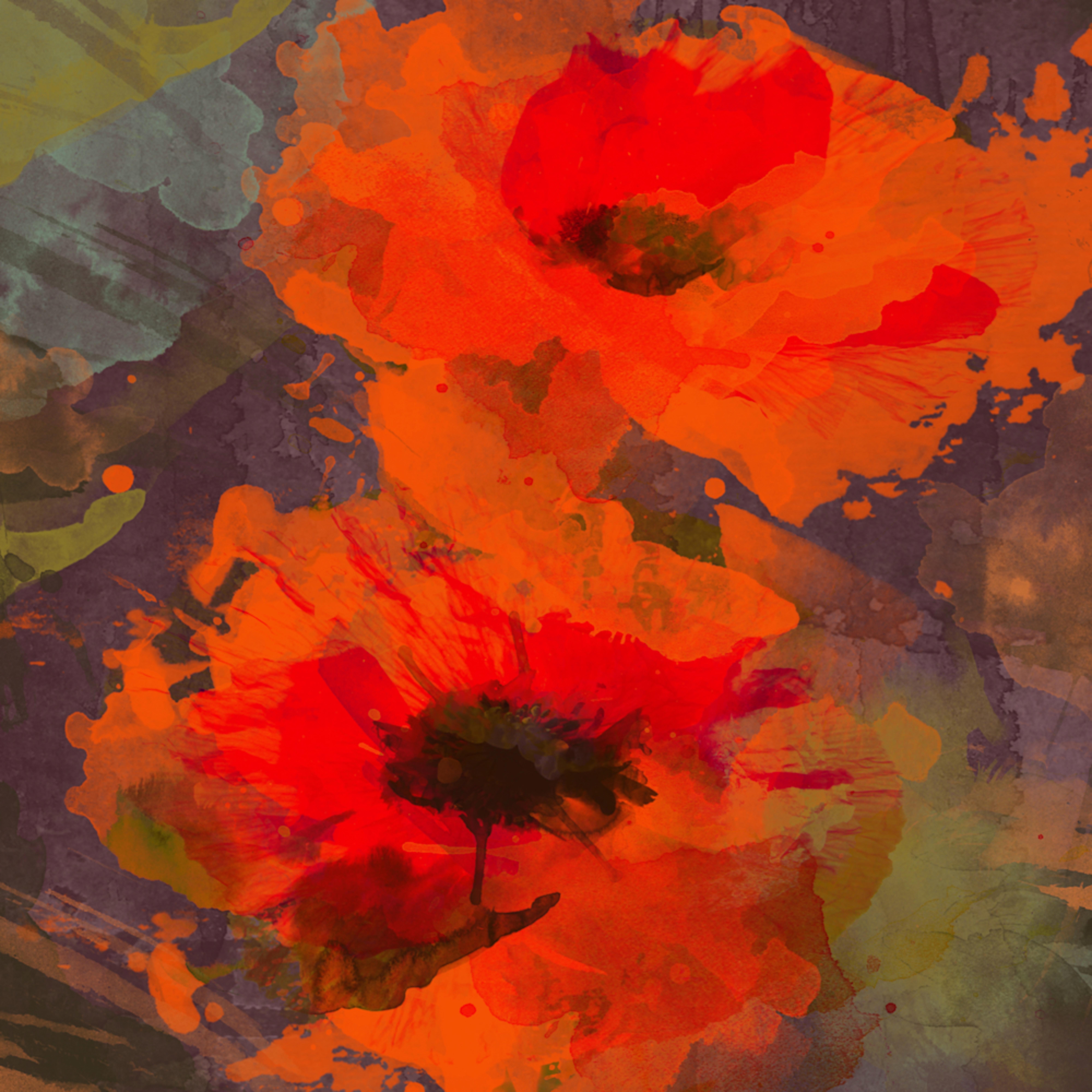 Symphony of poppies u133wf