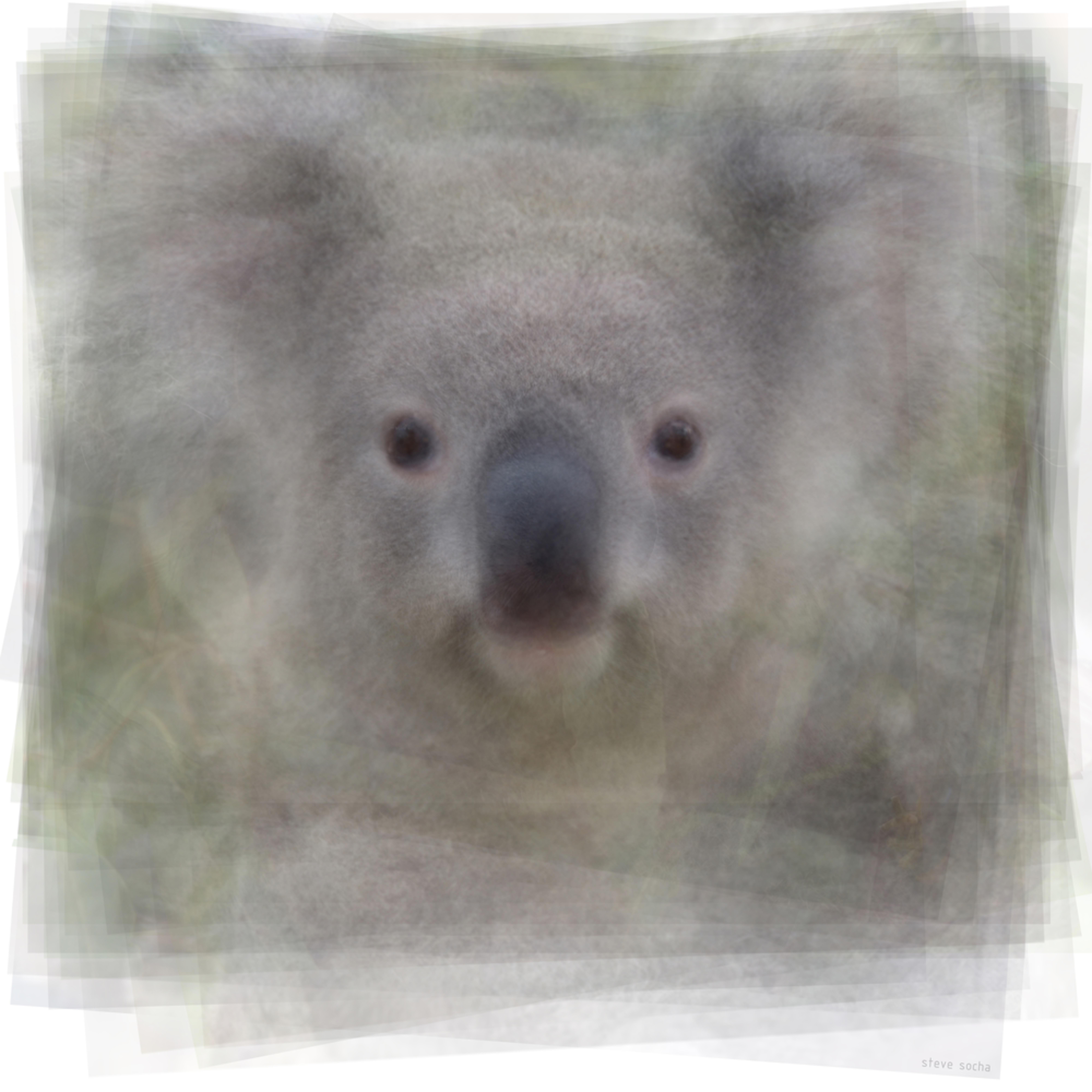 Koala face kmzbyt