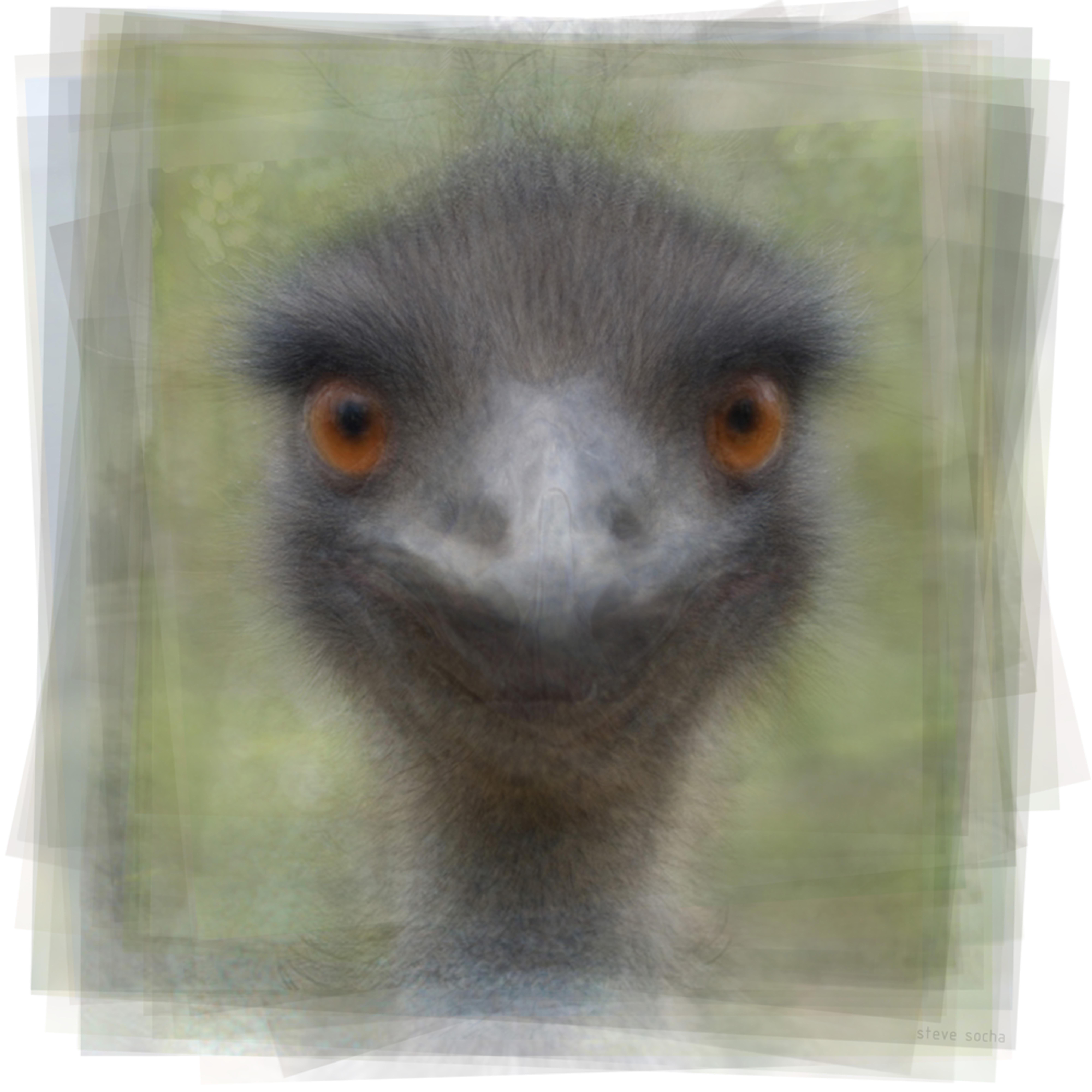 Emu2 lfde2y