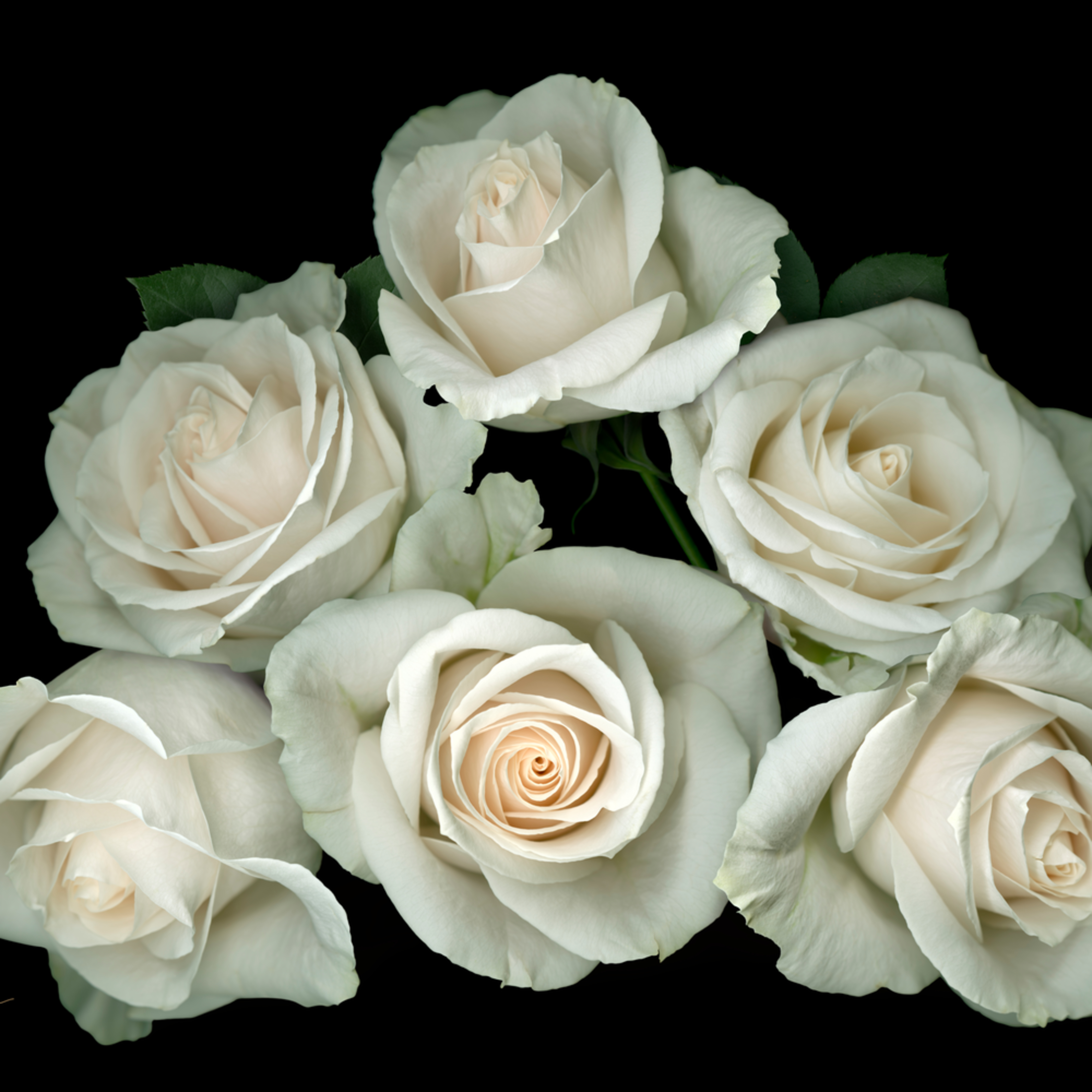 080101 ahern white rose pyramid black bgd iuxlpo