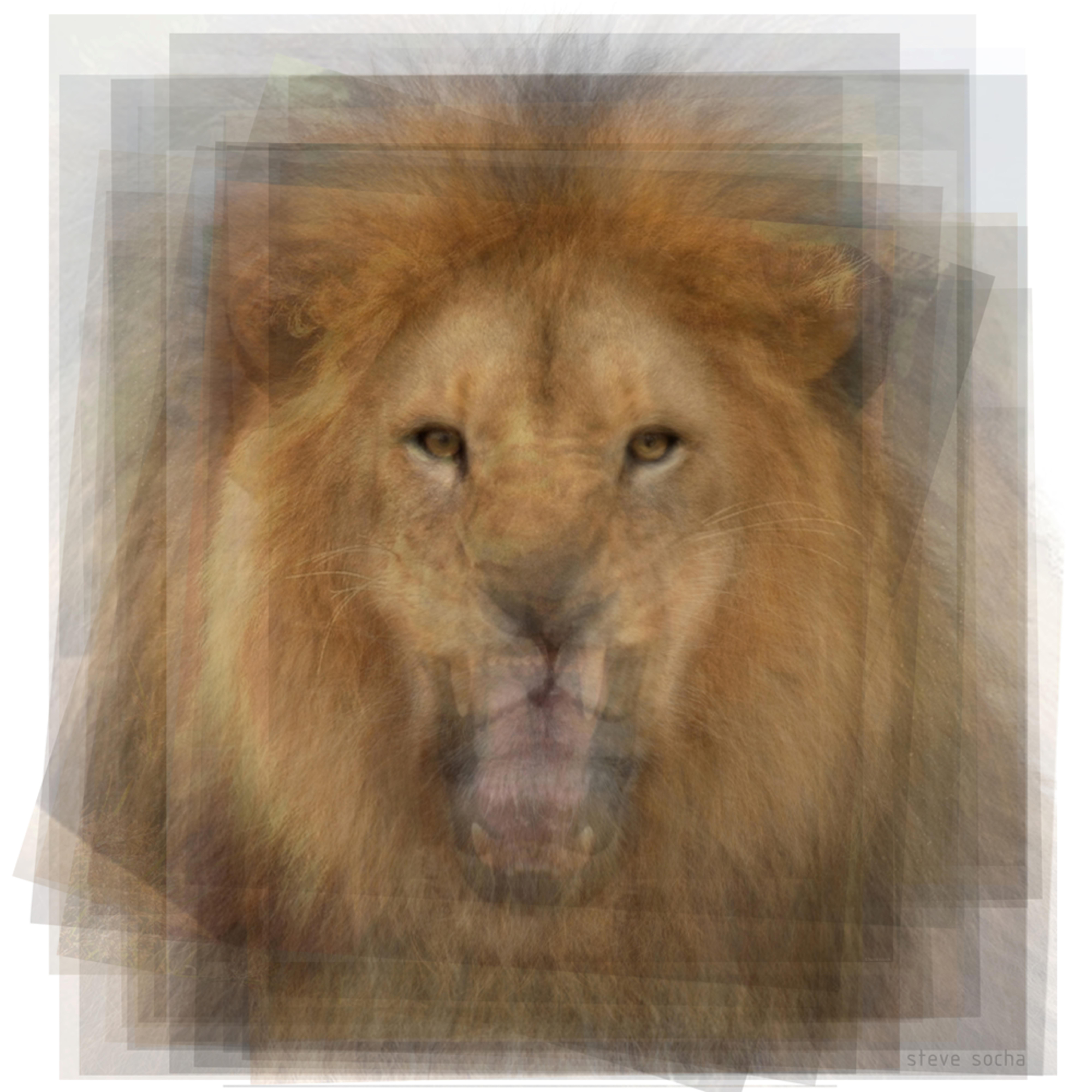 Lion xut8ge