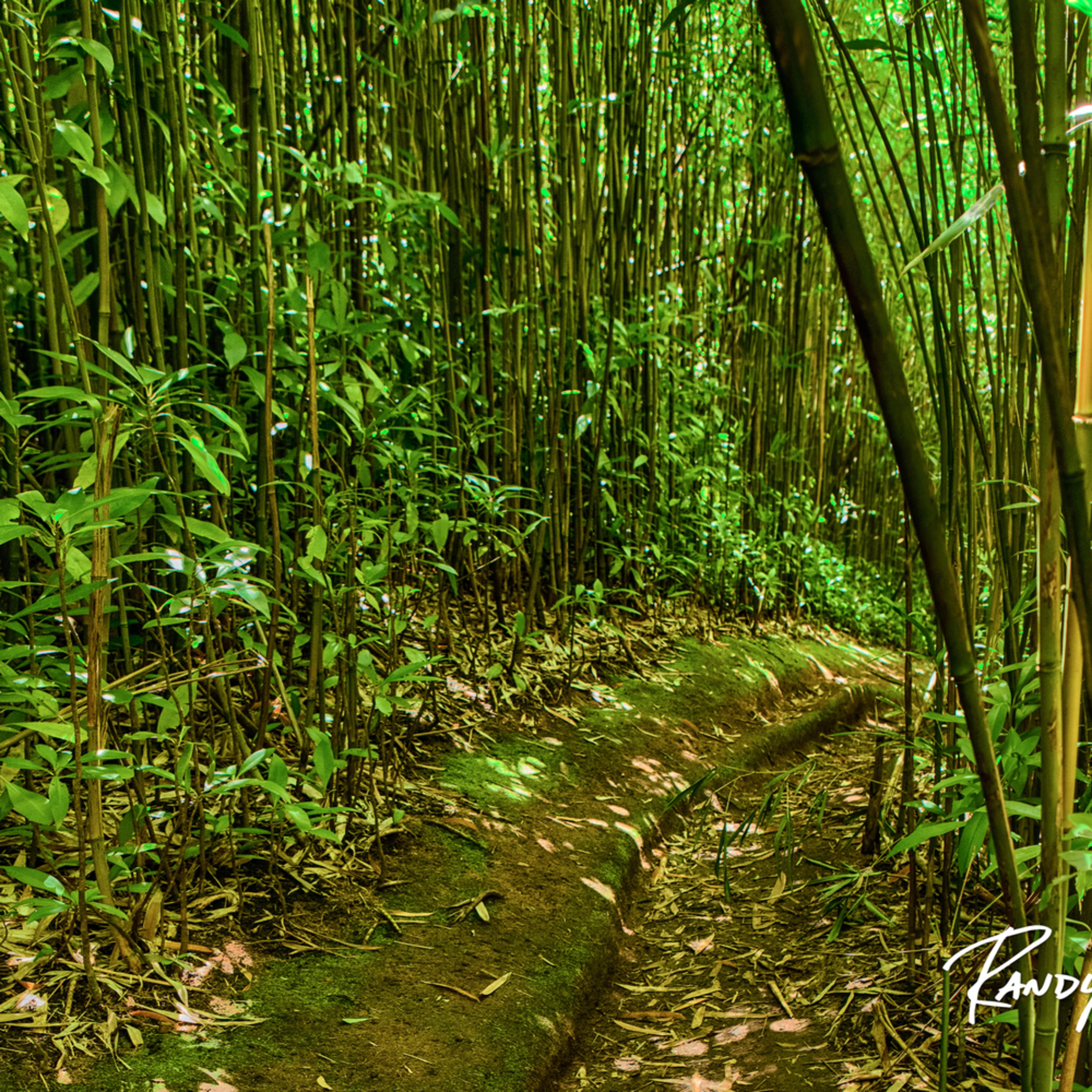 Brynne bamboo pathway60x30 b9r2xh