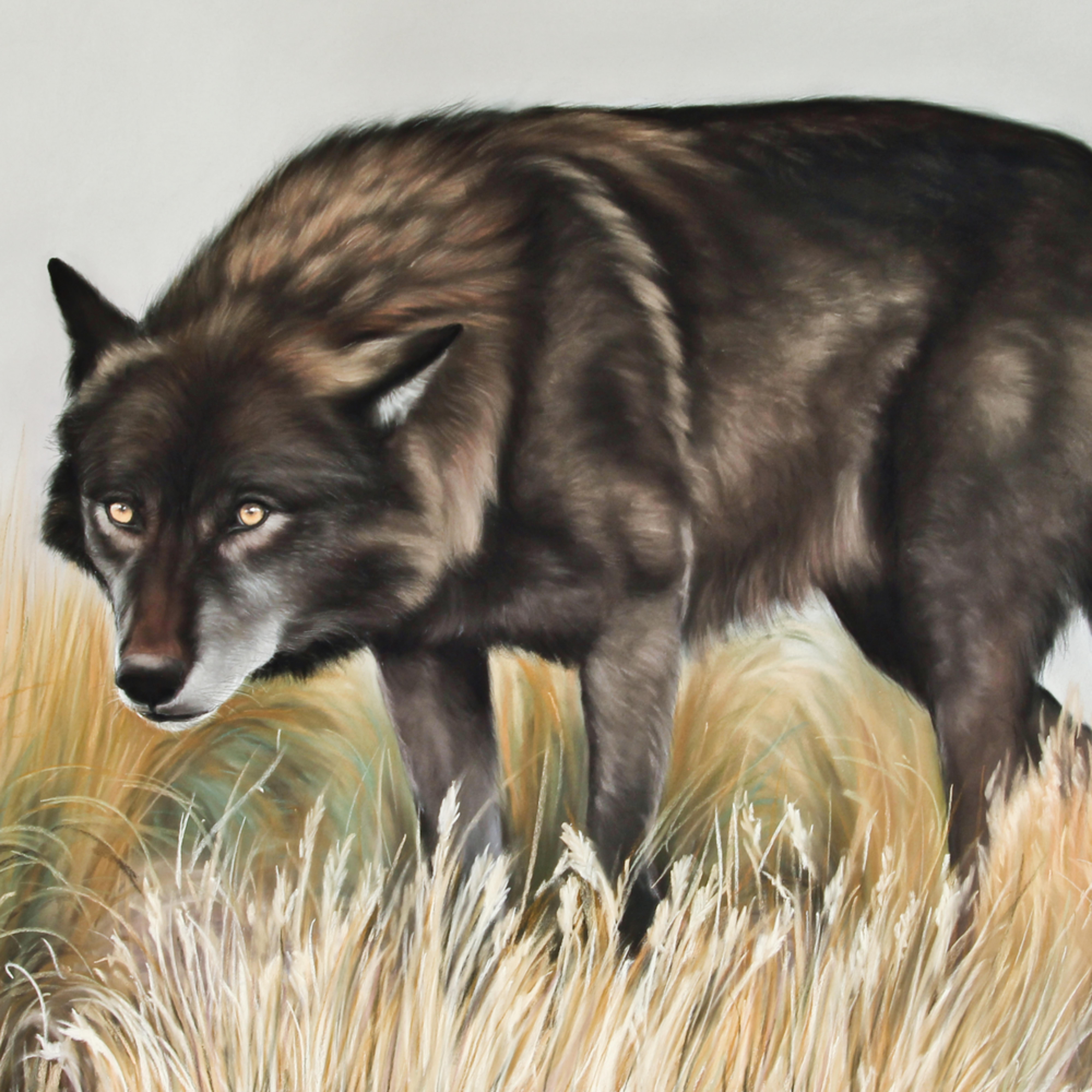 Blackwolf 1 of 1 qdv2hb