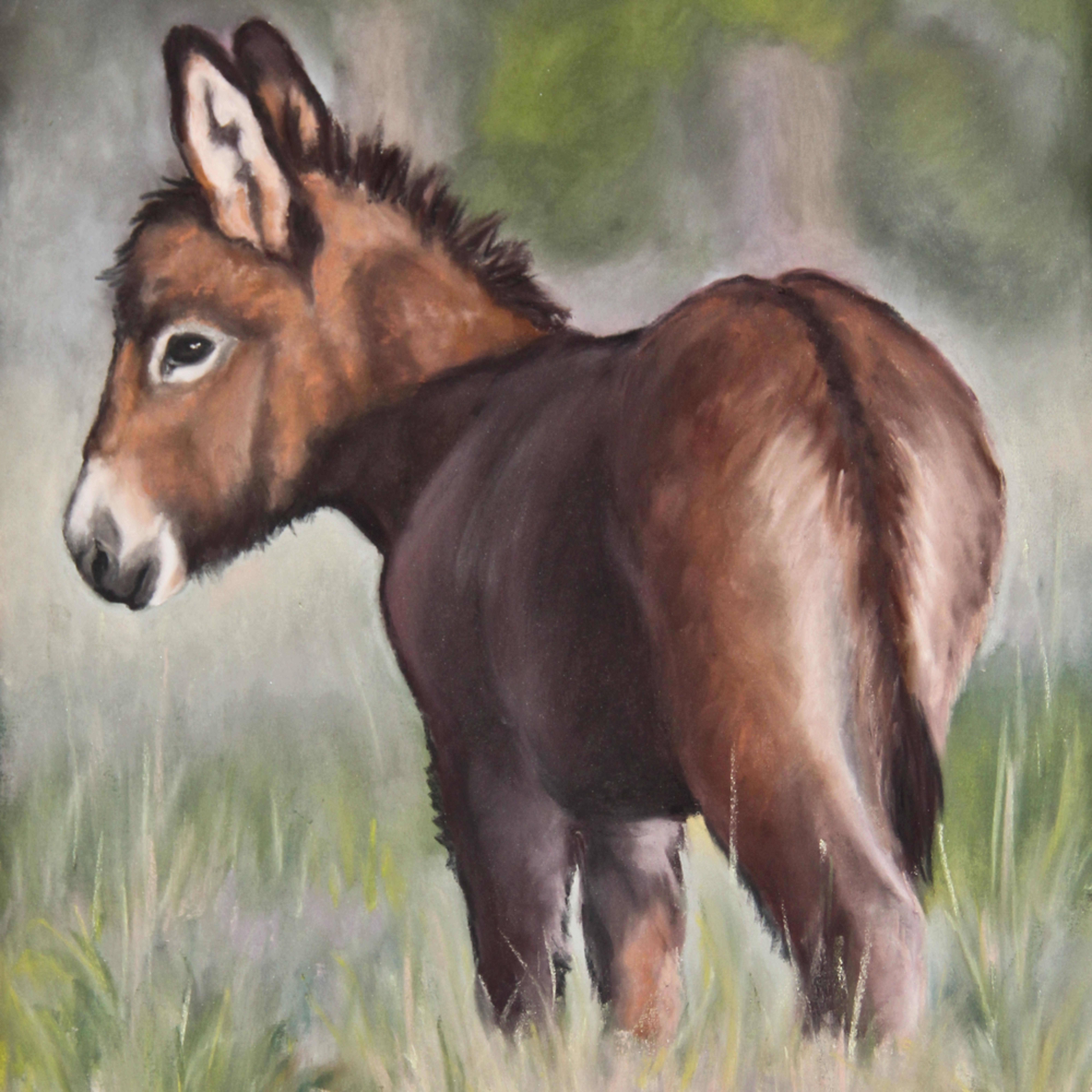 Donkey 1 of 2 af3l3l