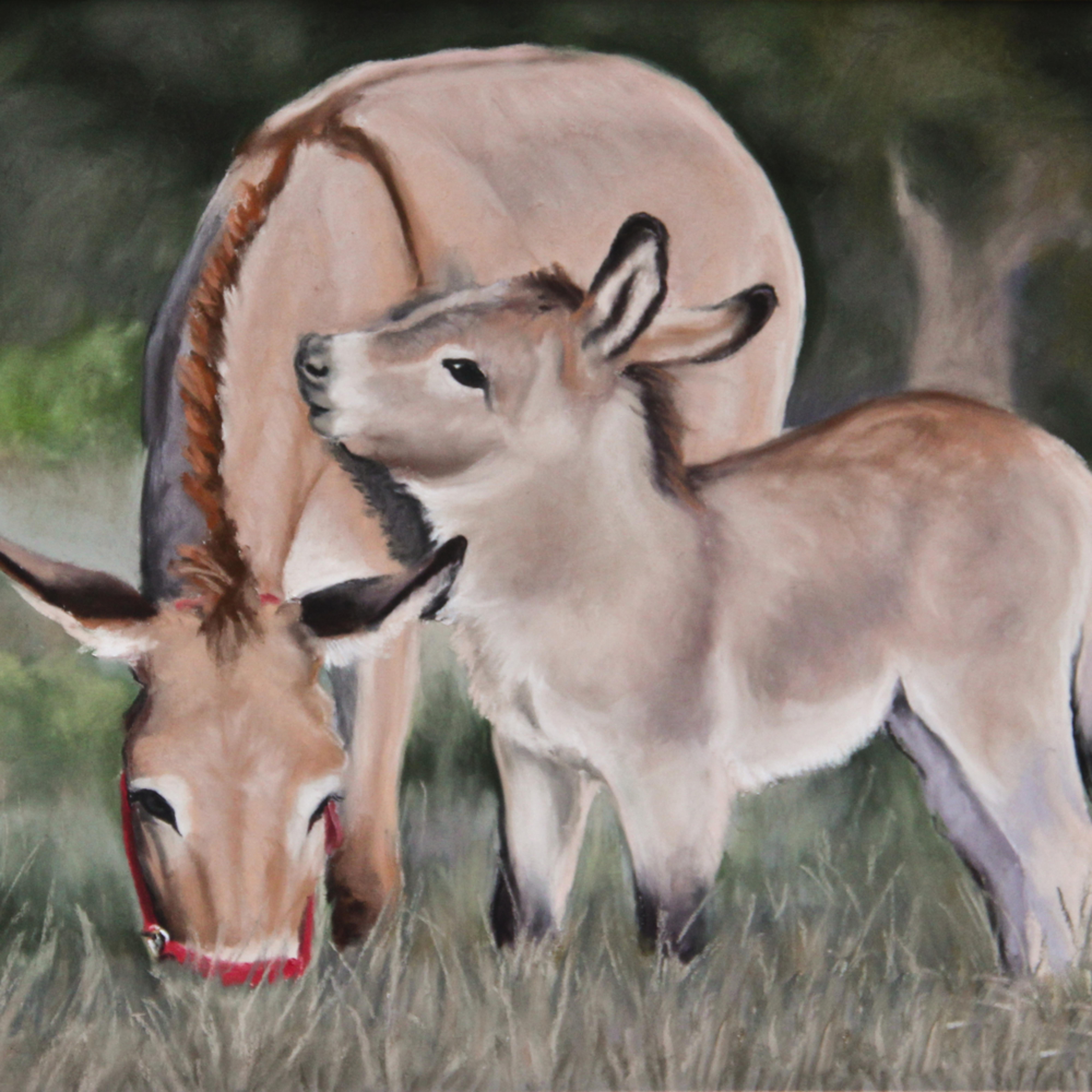 Donkey 2 of 2 nju43f