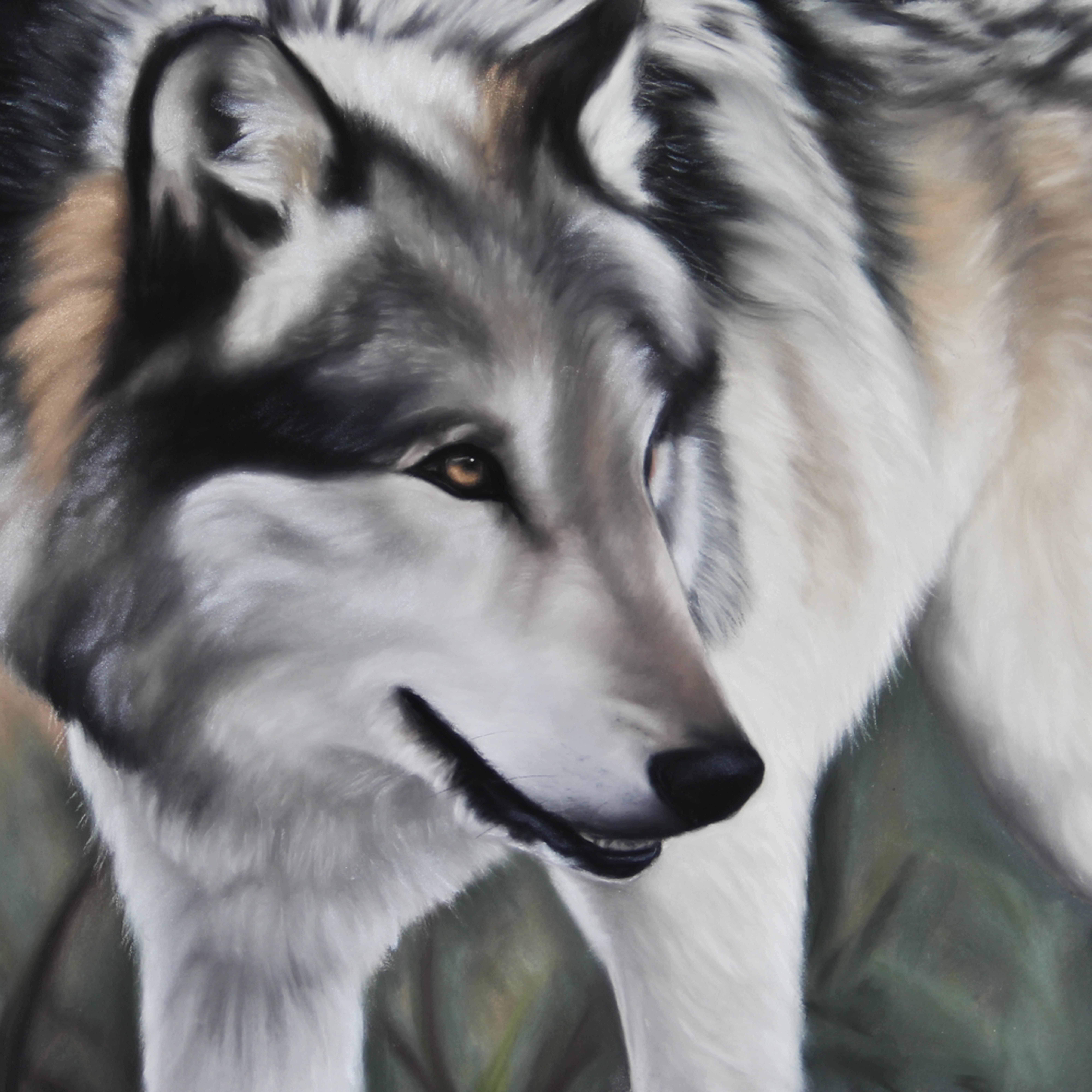 Wolf 1 of 1 n9scdw