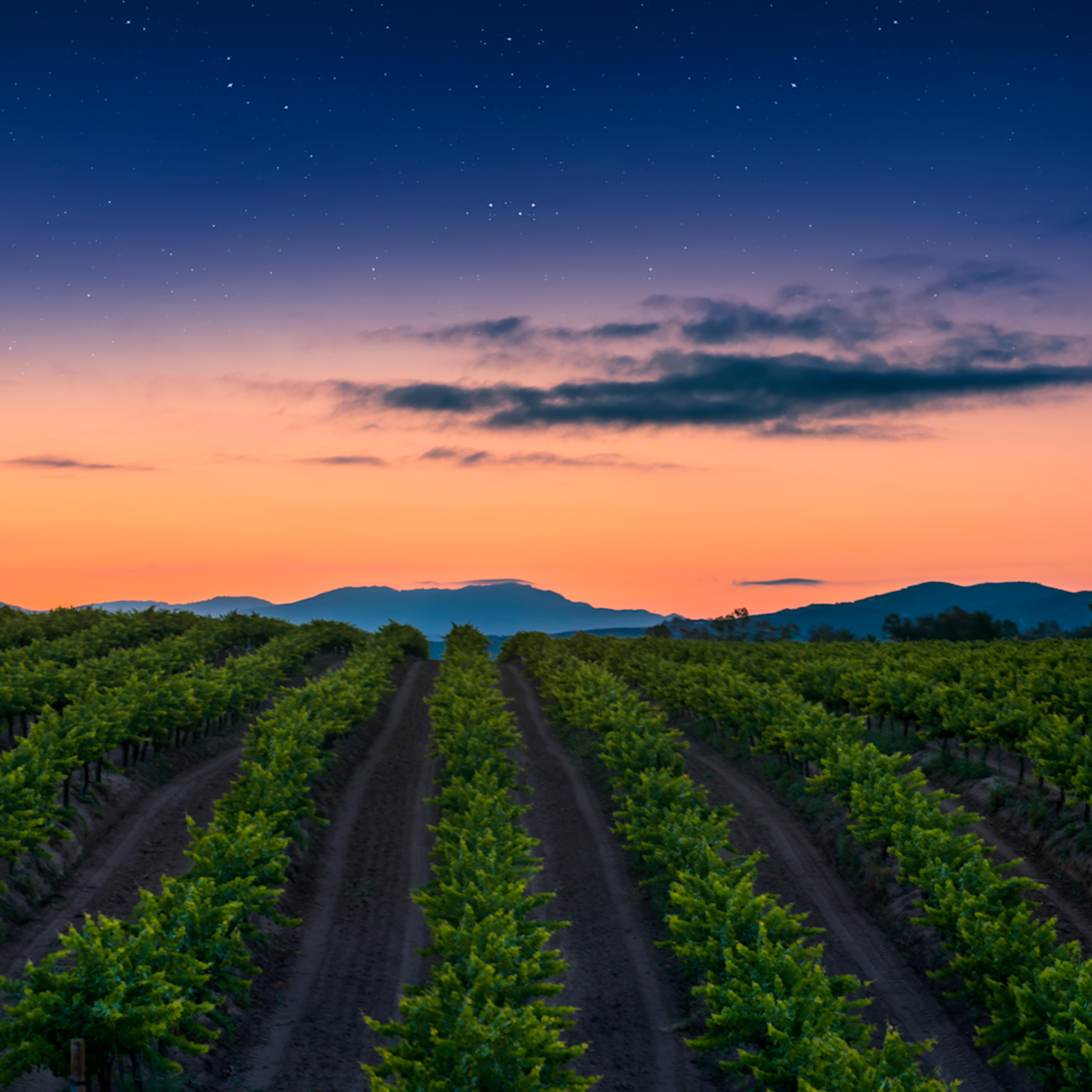 Apricot dawn aq0km1
