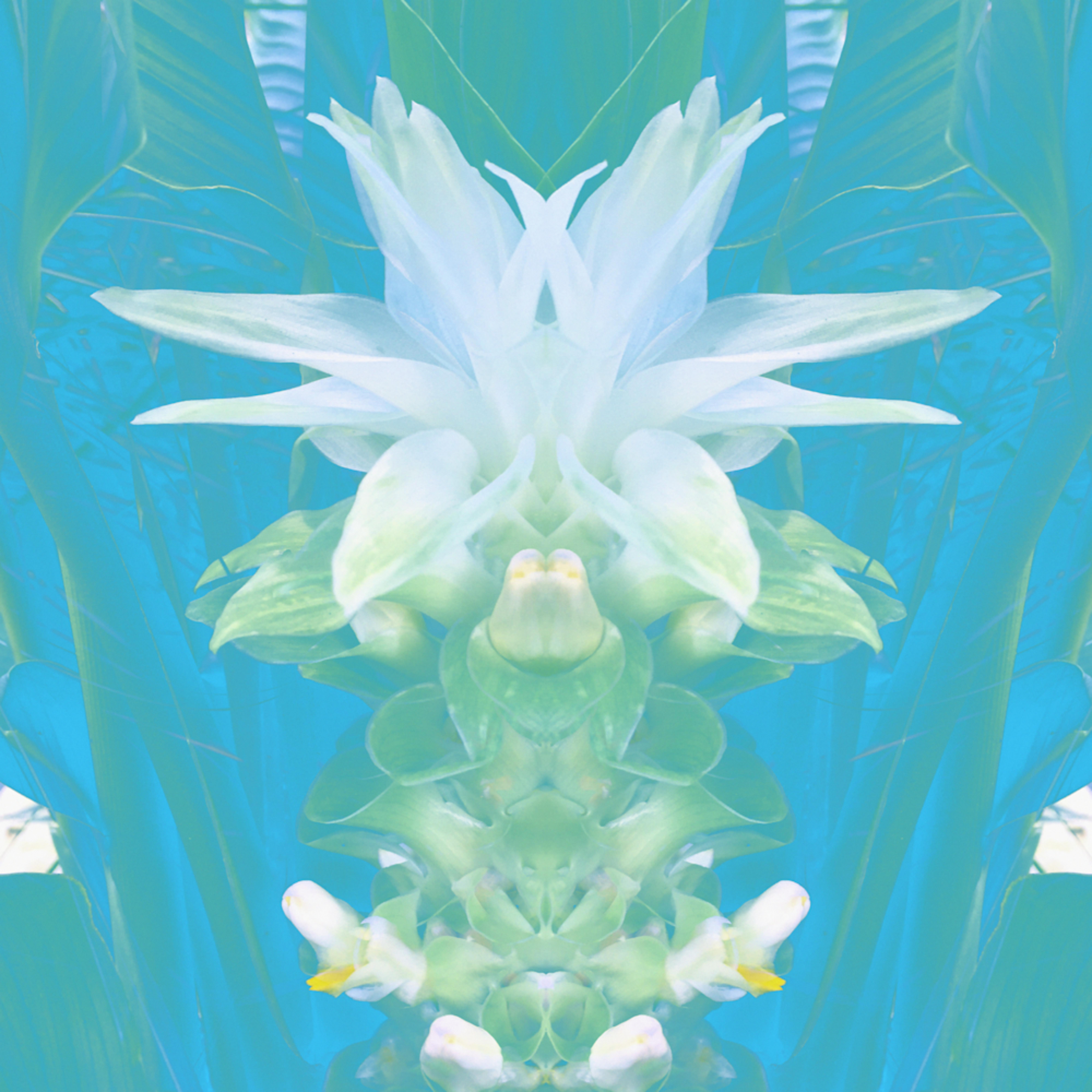 Futaba ginger waterlily xyclxn