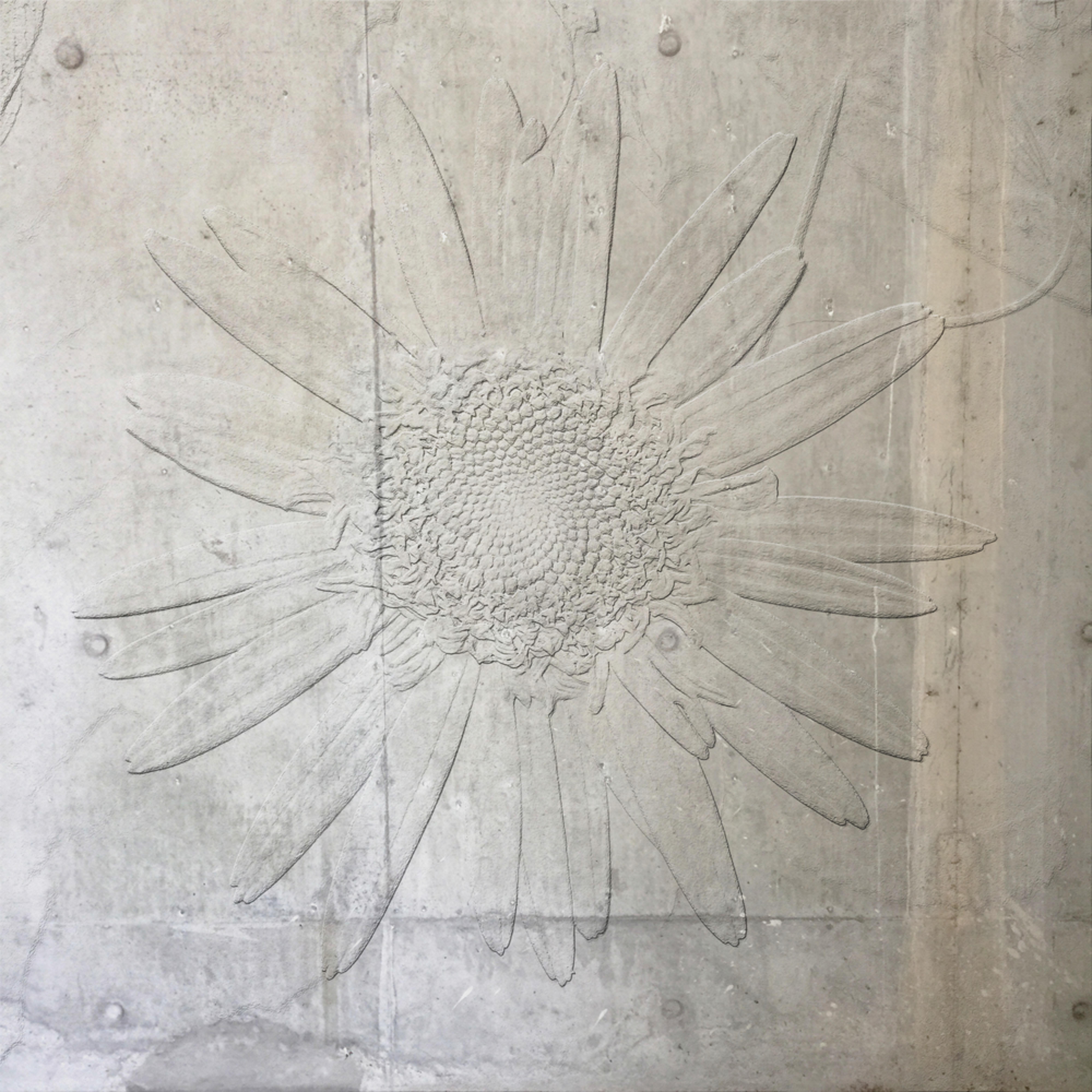 Concrete daisy 8000 hnh2kv