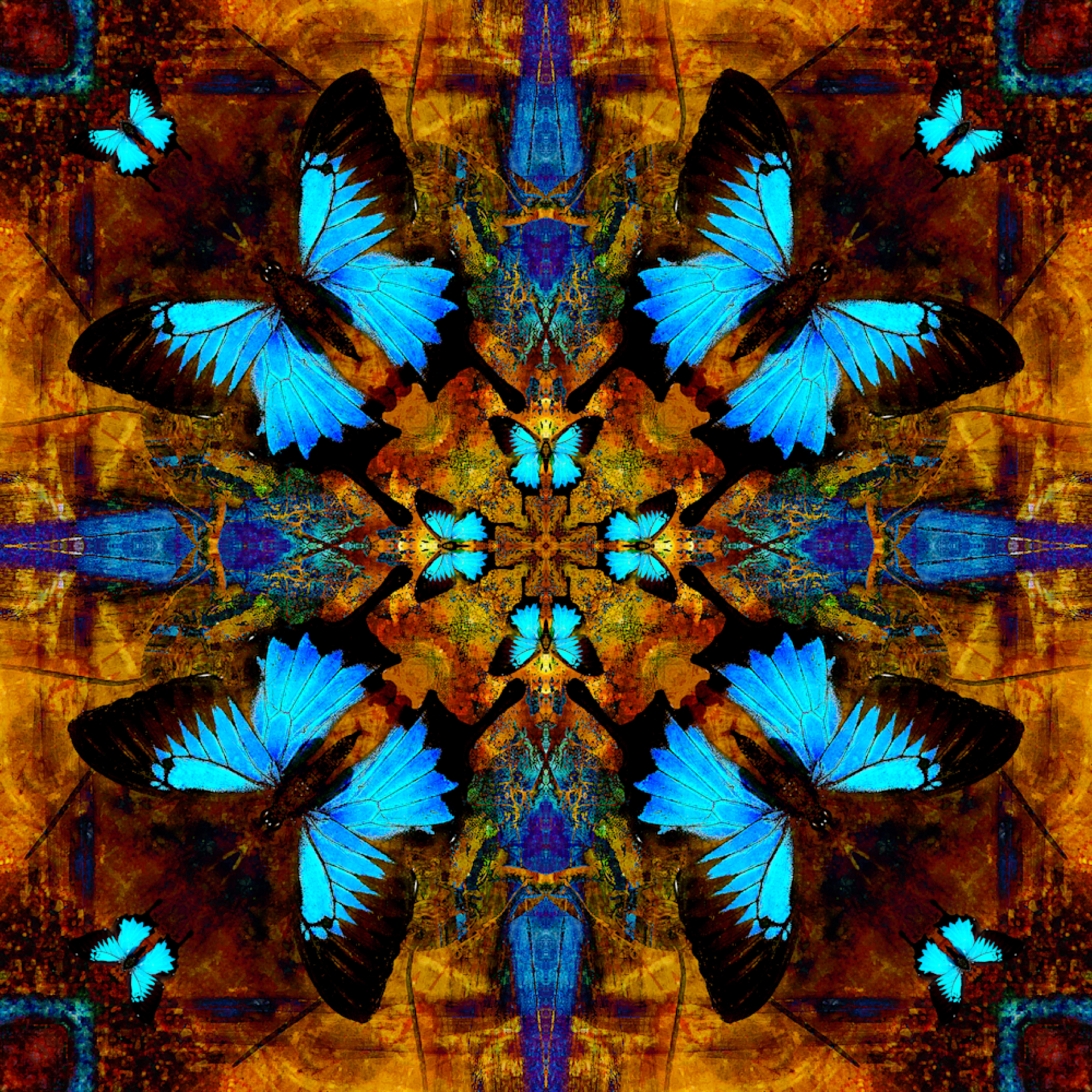 Papilio blues bqlhou