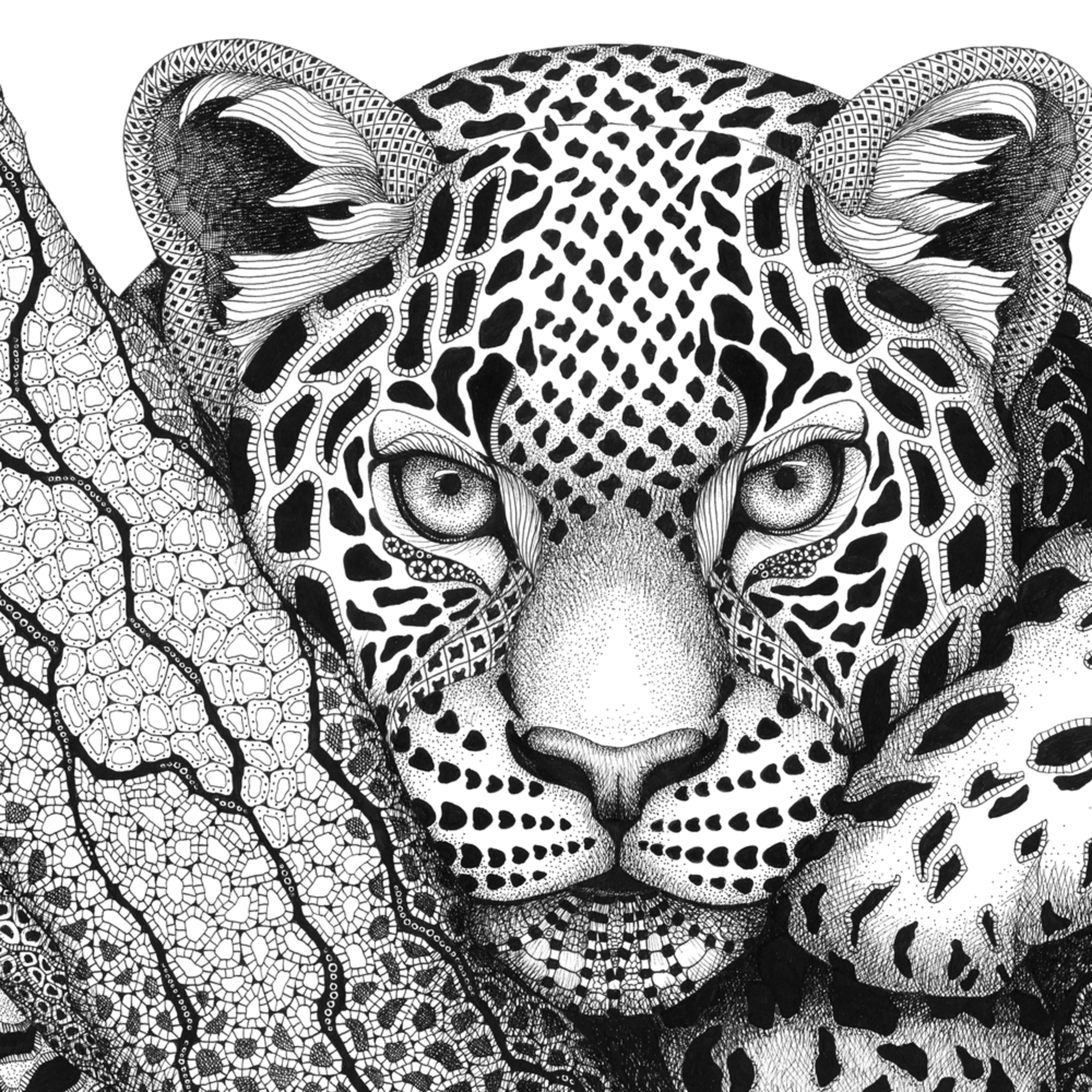 Leopard  large dodd portrait j4lsyo