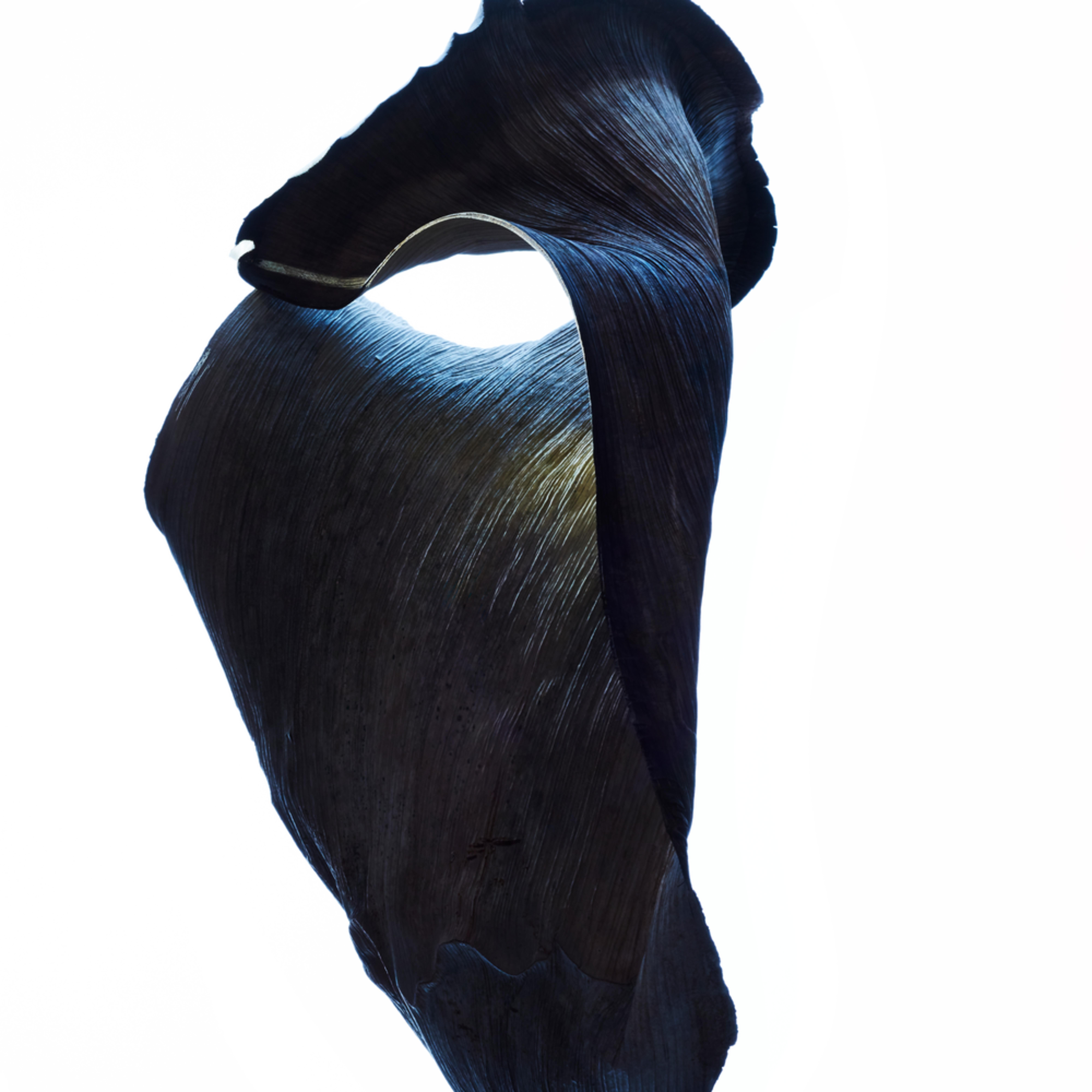 William couture phantom c8wups