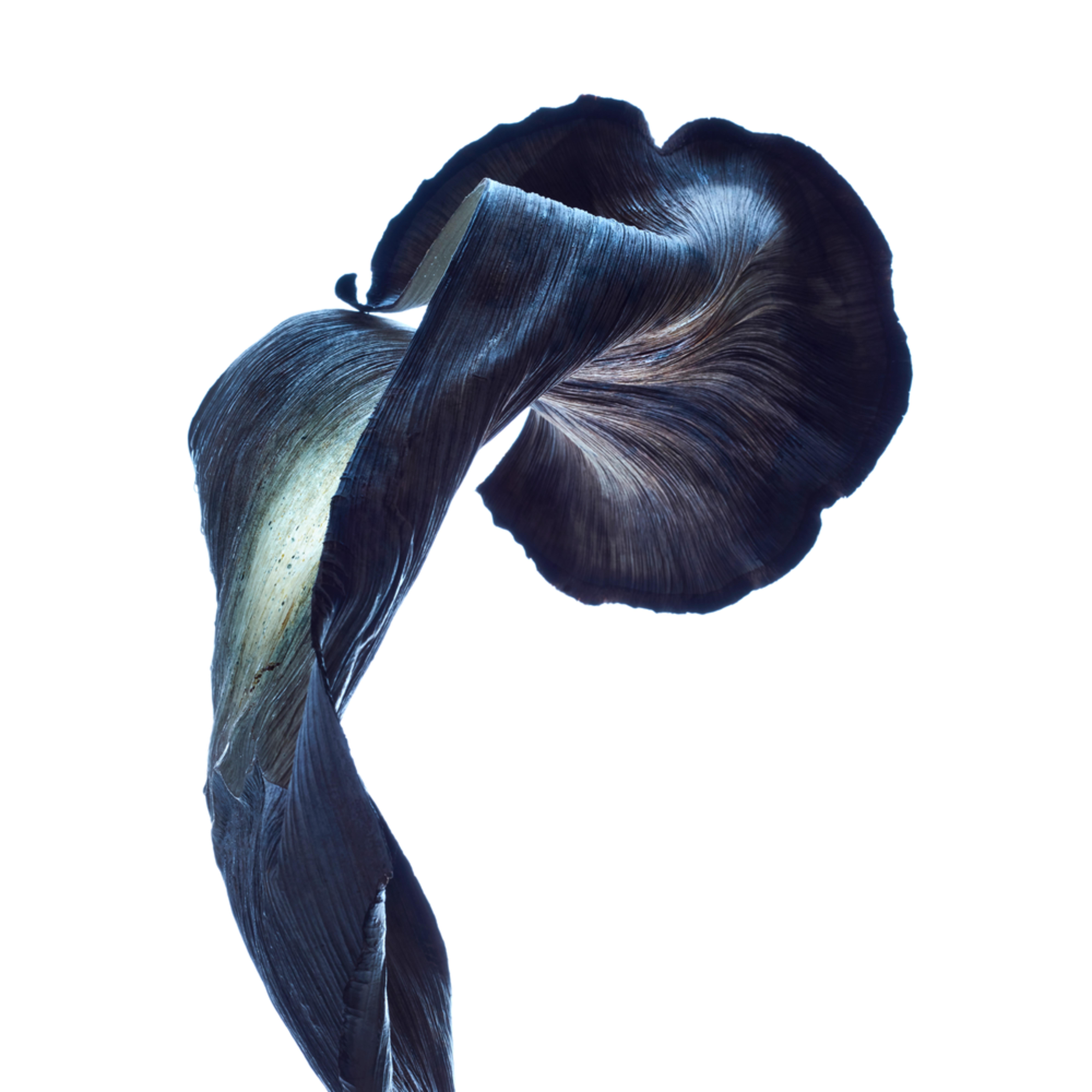 William couture nebula cv wrp ifwu97