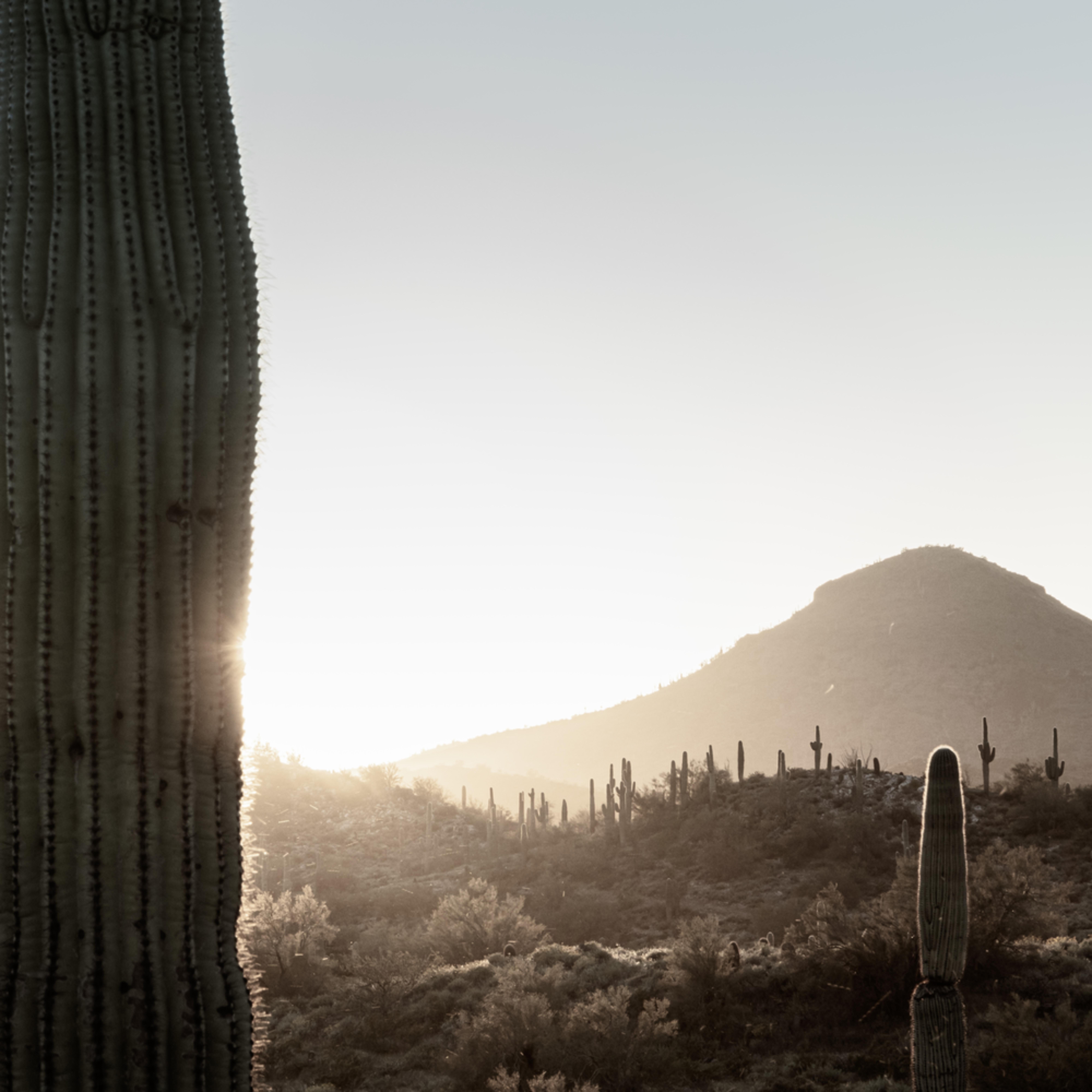Sonoran desert gold 2 yovpoy