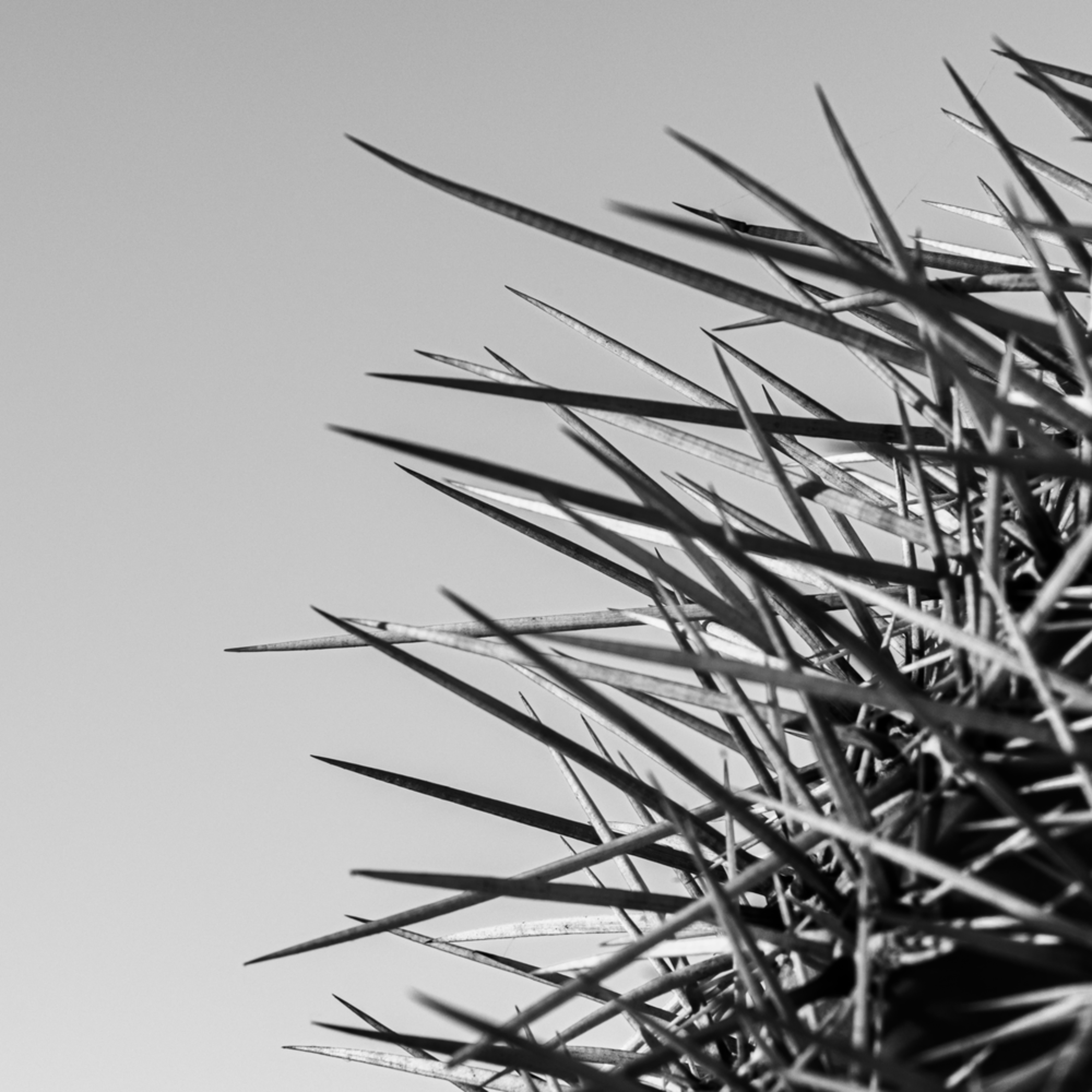 Saguaro top xecan8