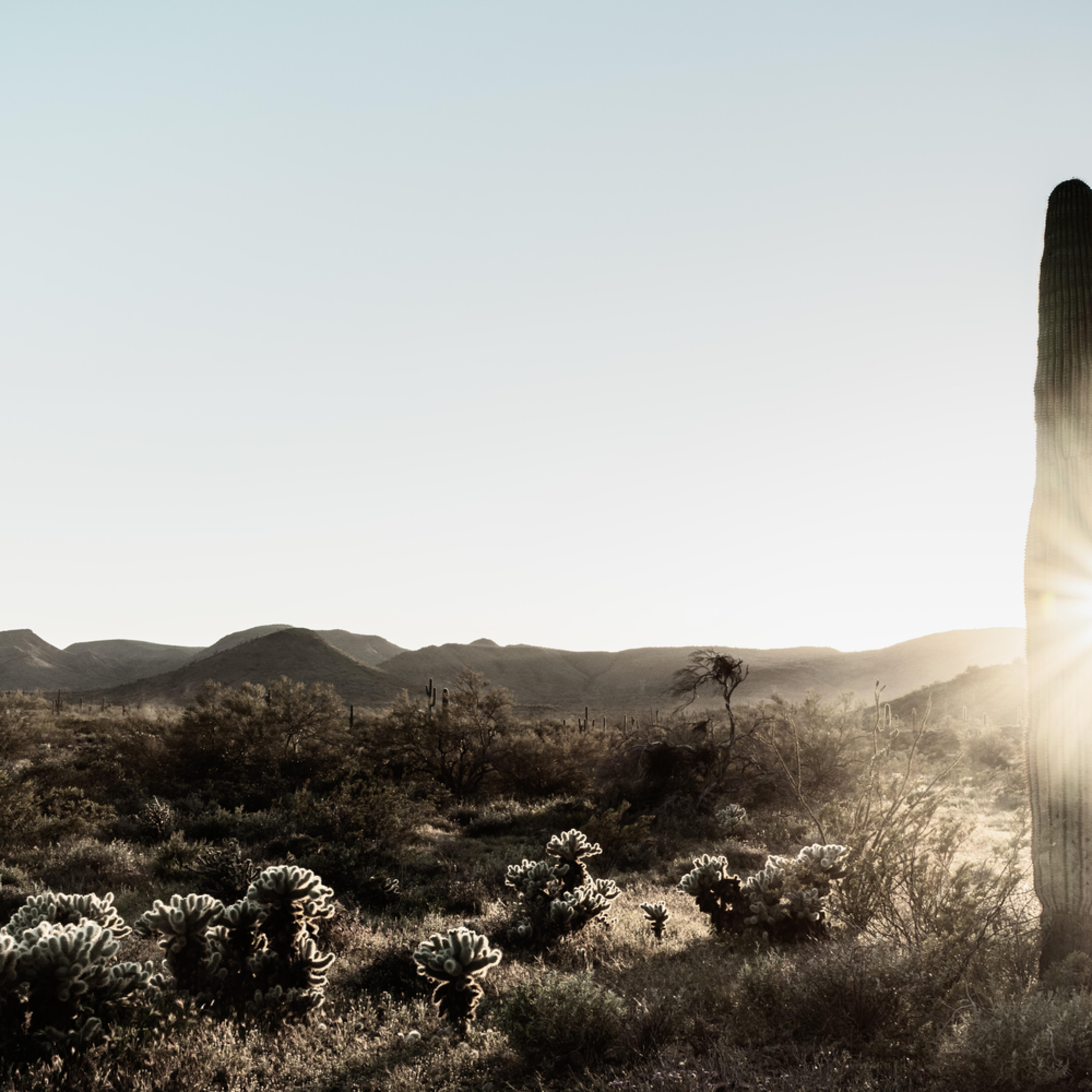 Sonoran desert gold 1 bxmmyb