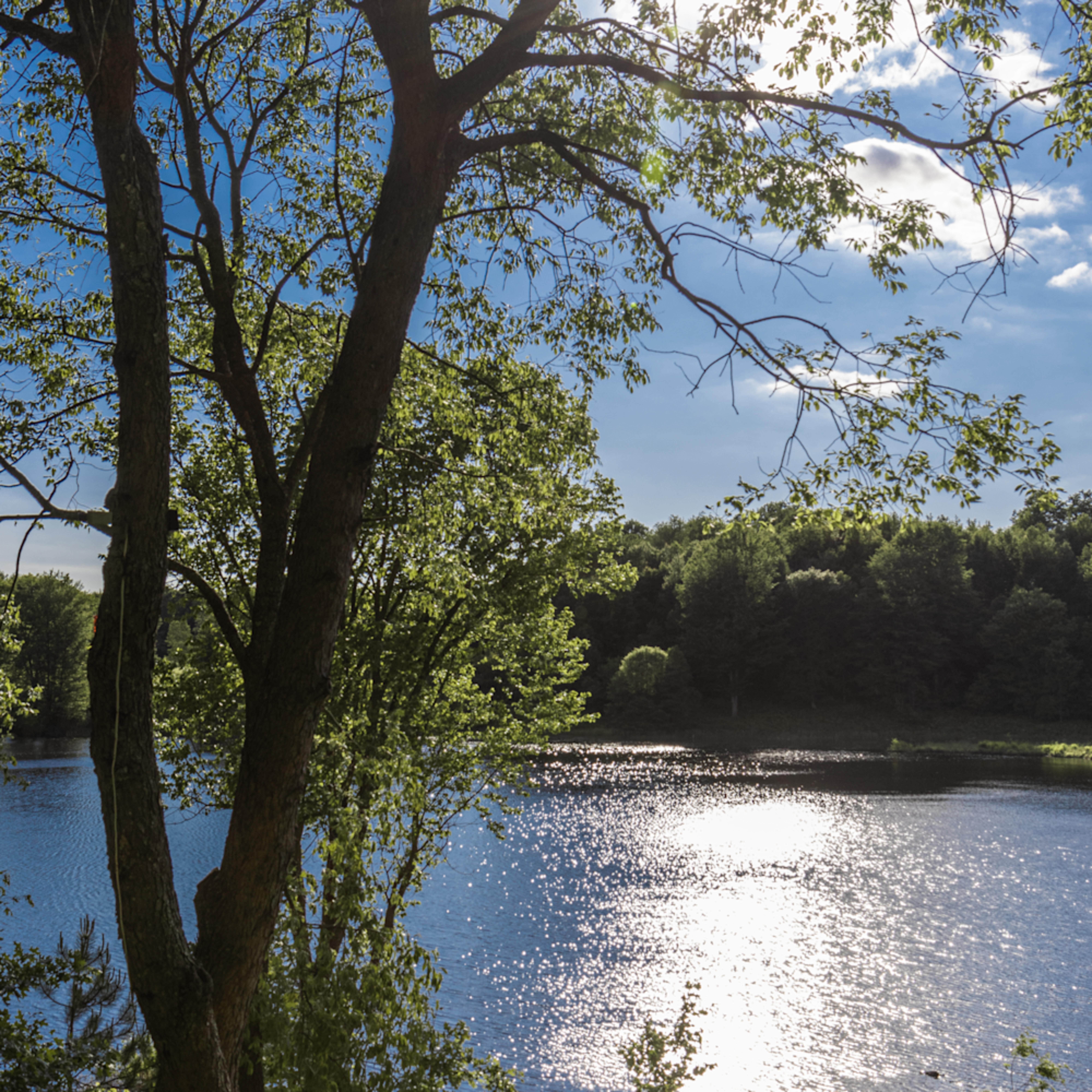 Cole lake reflections oqqyzj