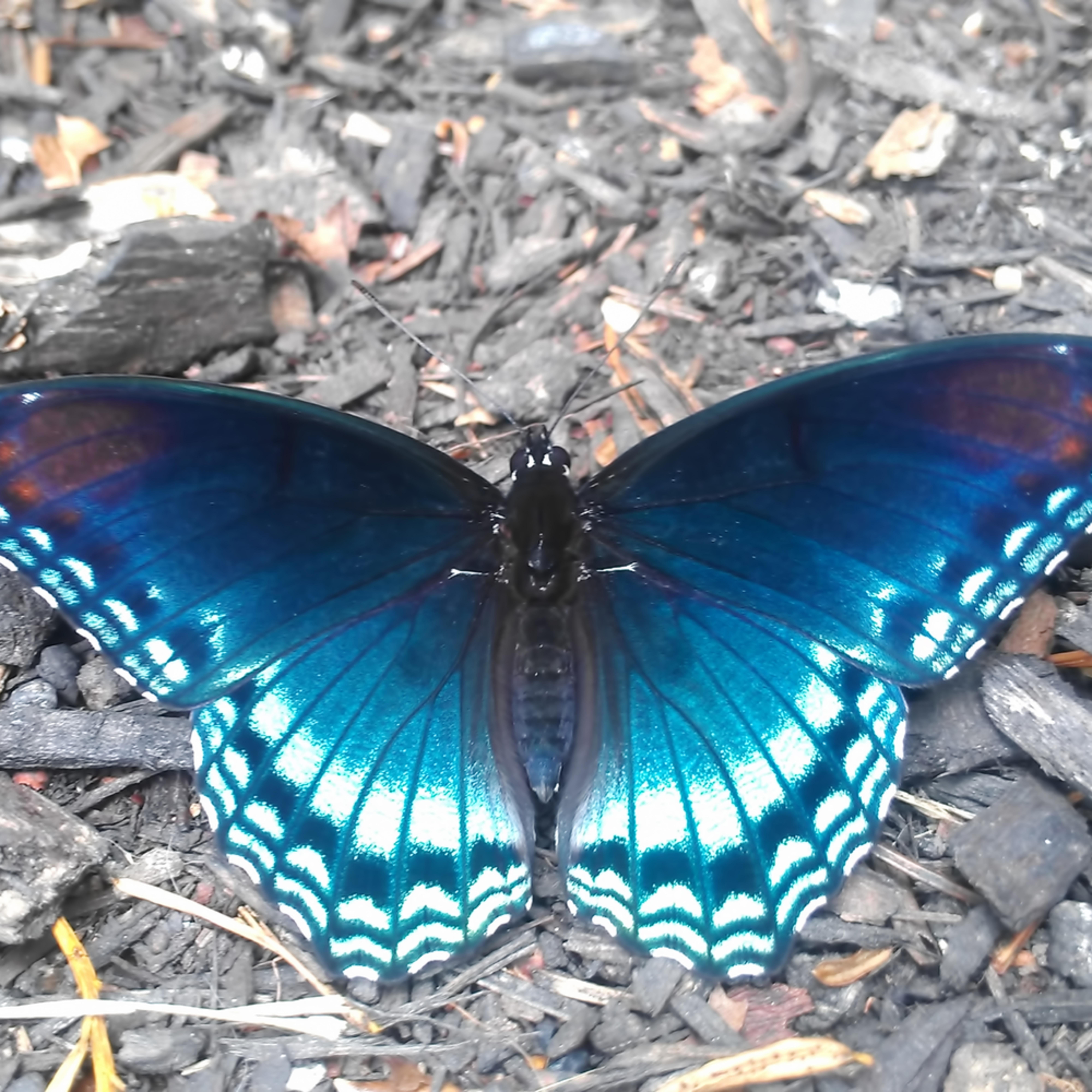 Imag0877 butterfly lxmrvw