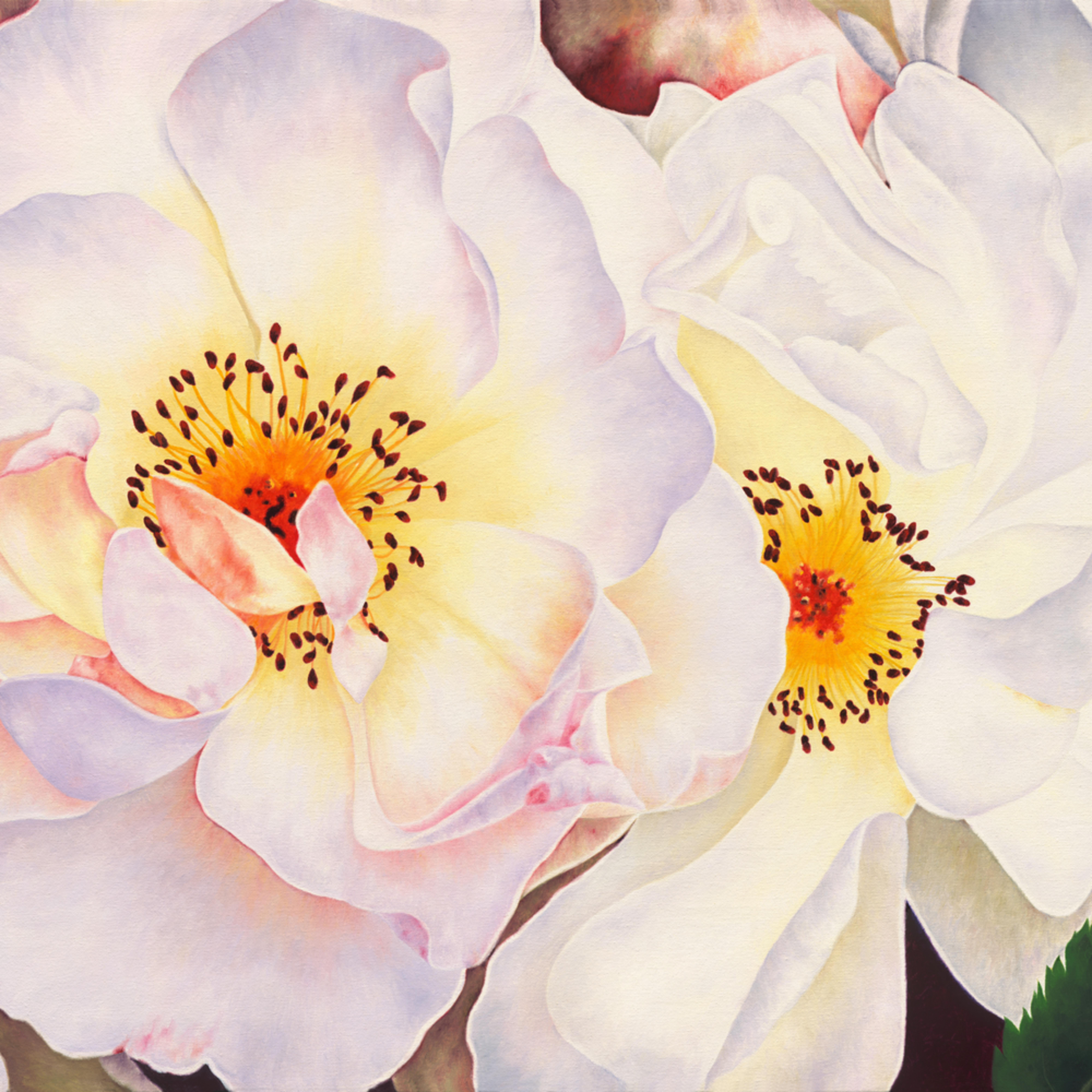 White roses srgb 360 ready copy  makesmaller  ujwoz4