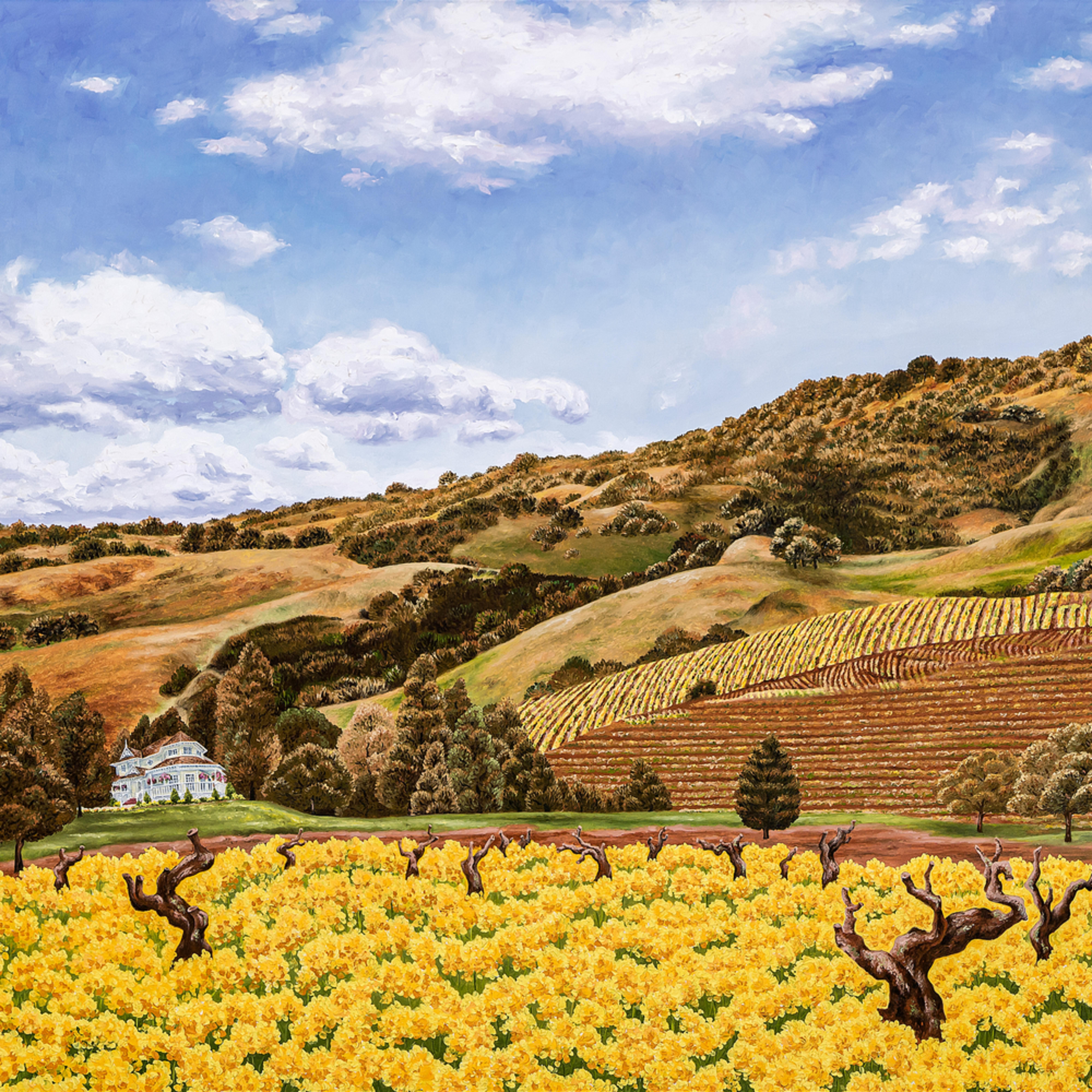 Sonoma old vines 27 x36 print dq5cnr