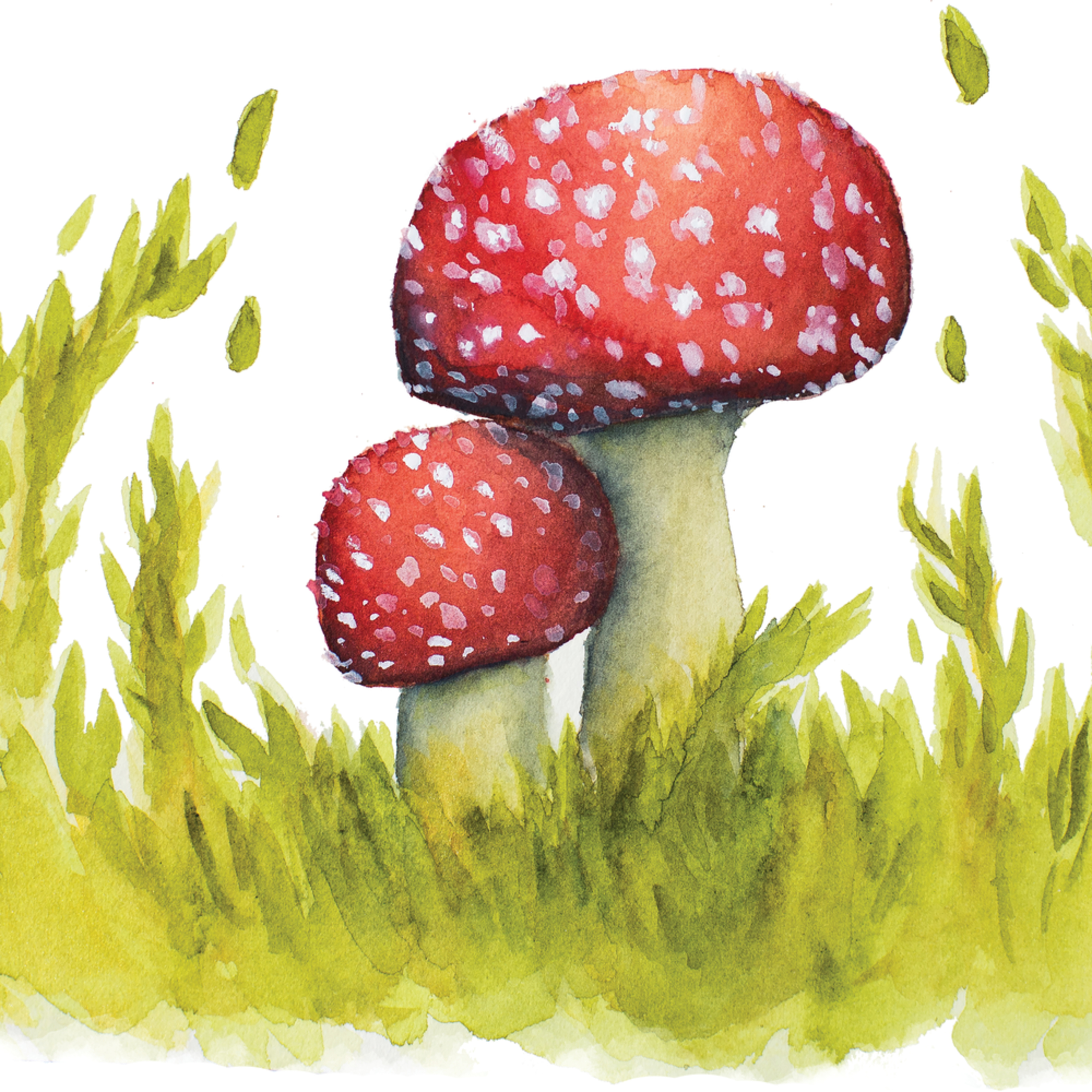 Enchanted meadow fly agaric print file   allison lyon art y8eywm