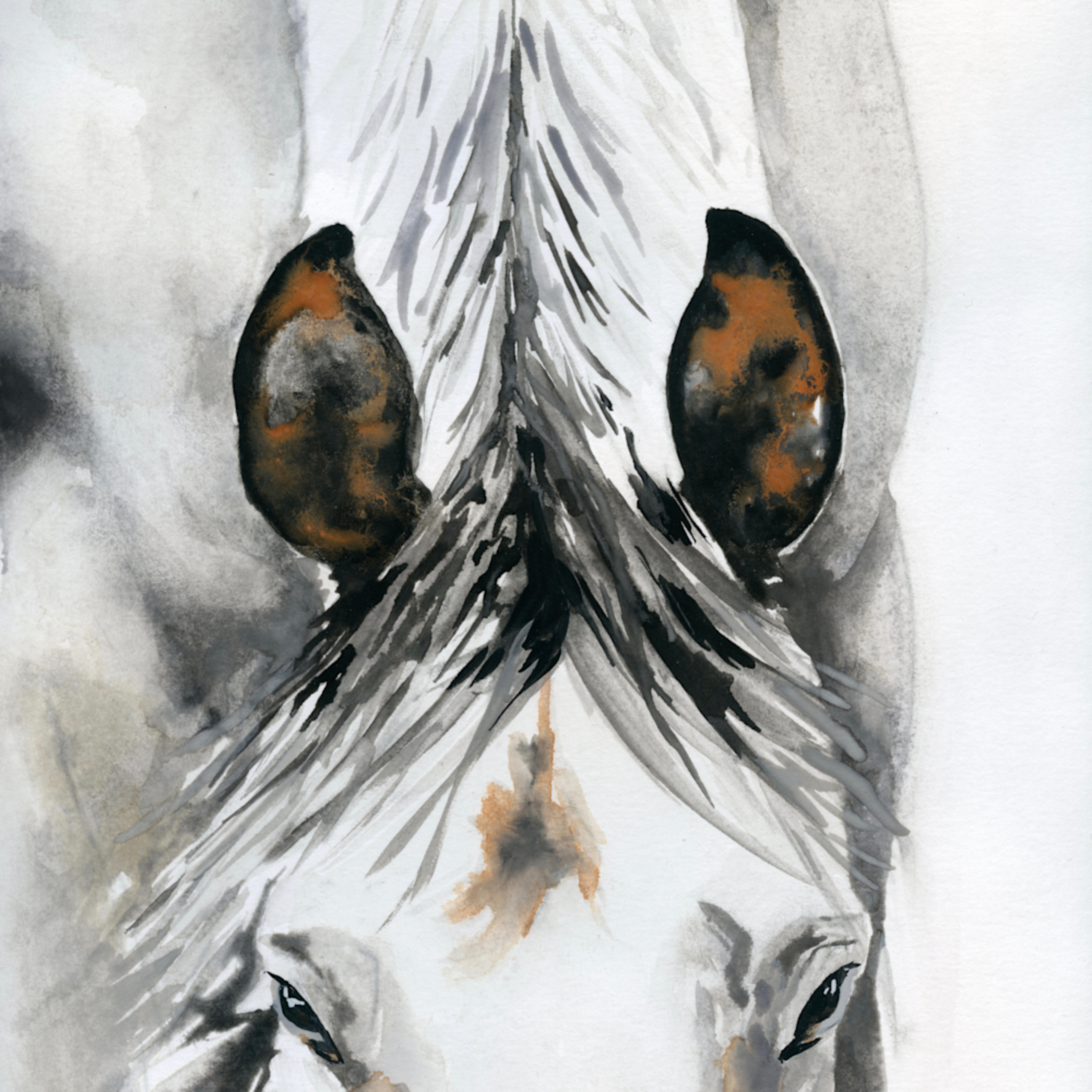 Large  white horse nose down 9x12 xodjl7