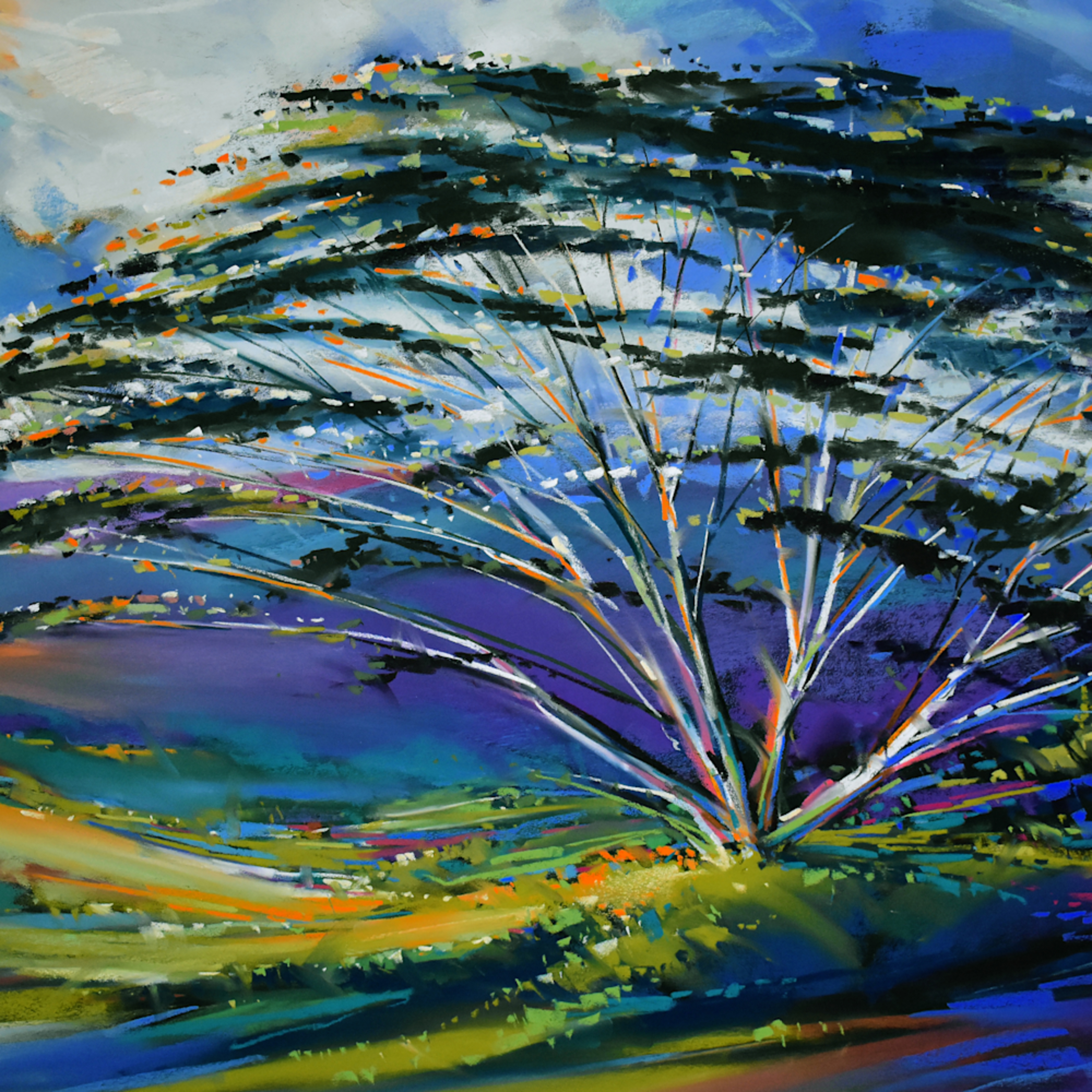 Acacia hillside 1 iqicps
