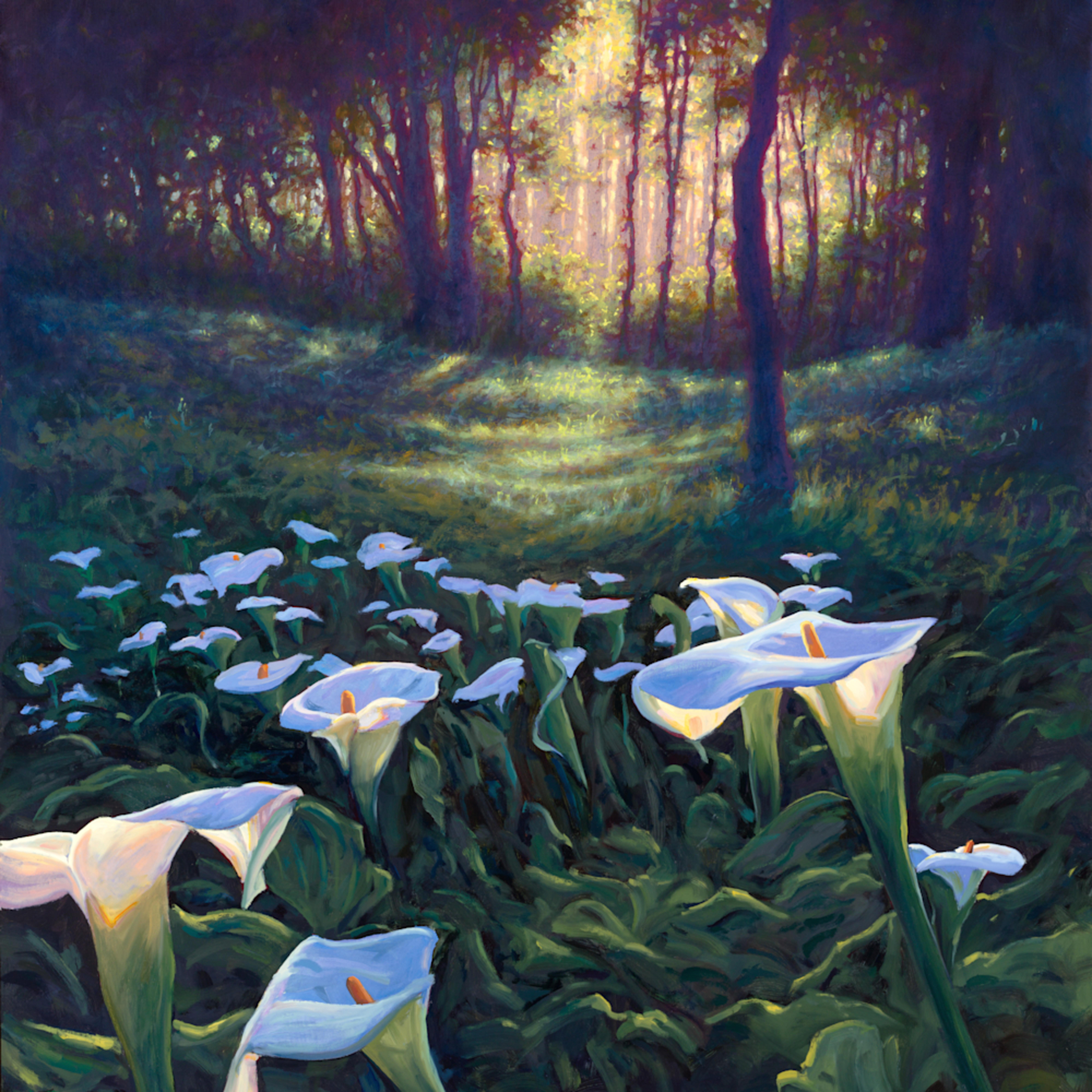 Zantedeschia trail  calla lillies  36x48 oils on panel 5300 large print ciwjdi