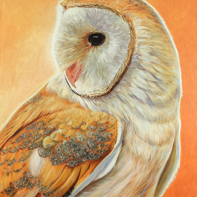 Bella   barn owl gptrze