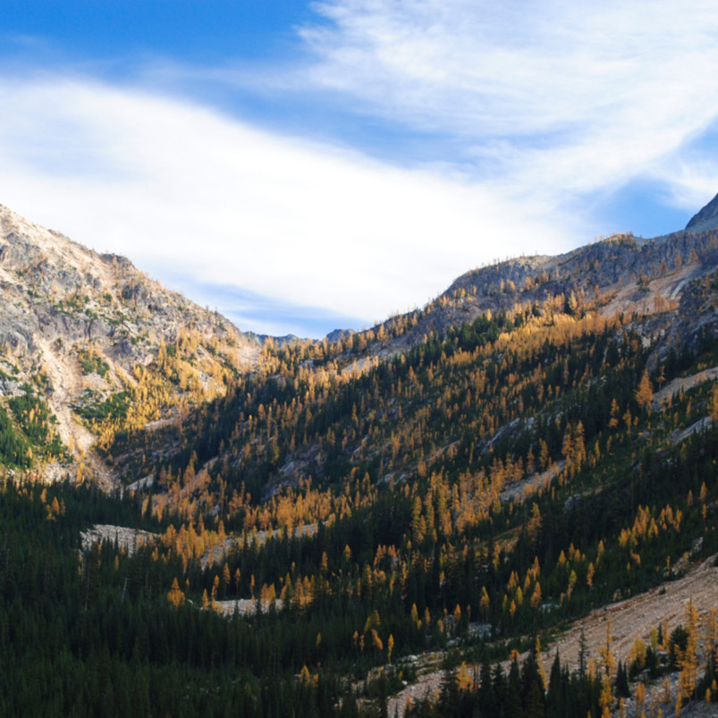 20652642 larches on9vy0