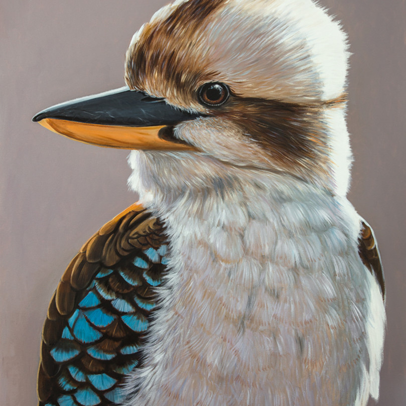 Harry   kookaburra pvg7dw