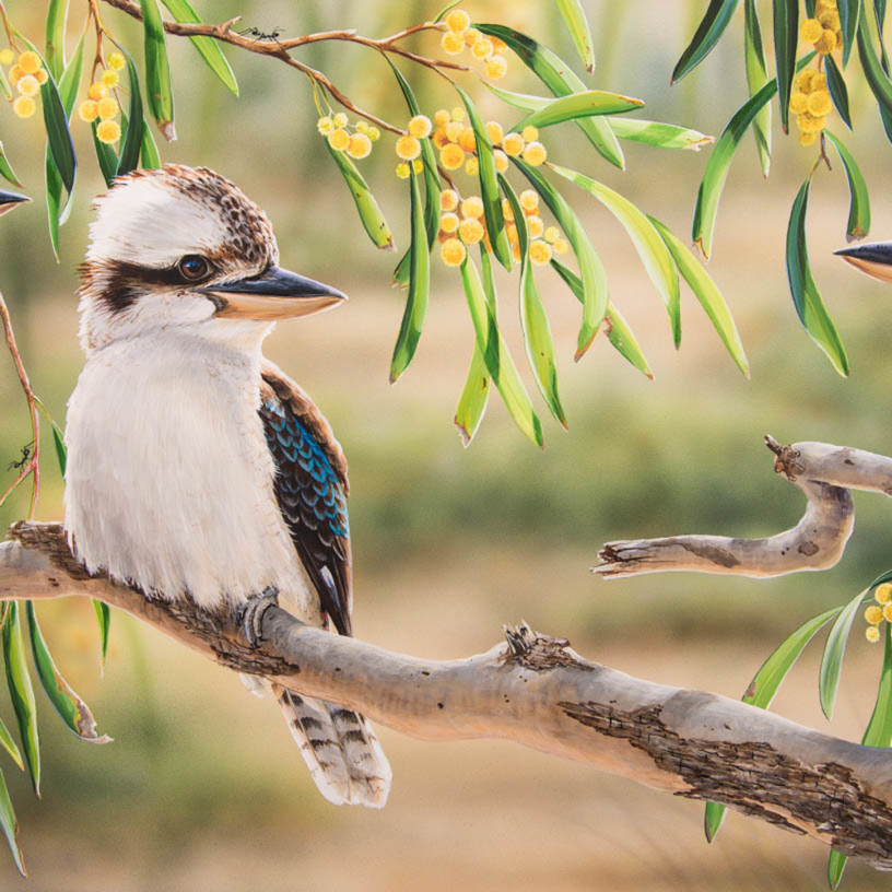 Golden life kookaburras with golden wattle natalie jane parker yskmdi