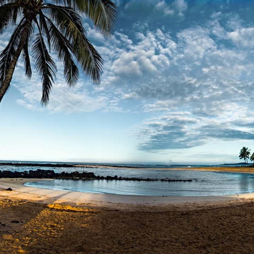 Poipu beach palm k0cyx0