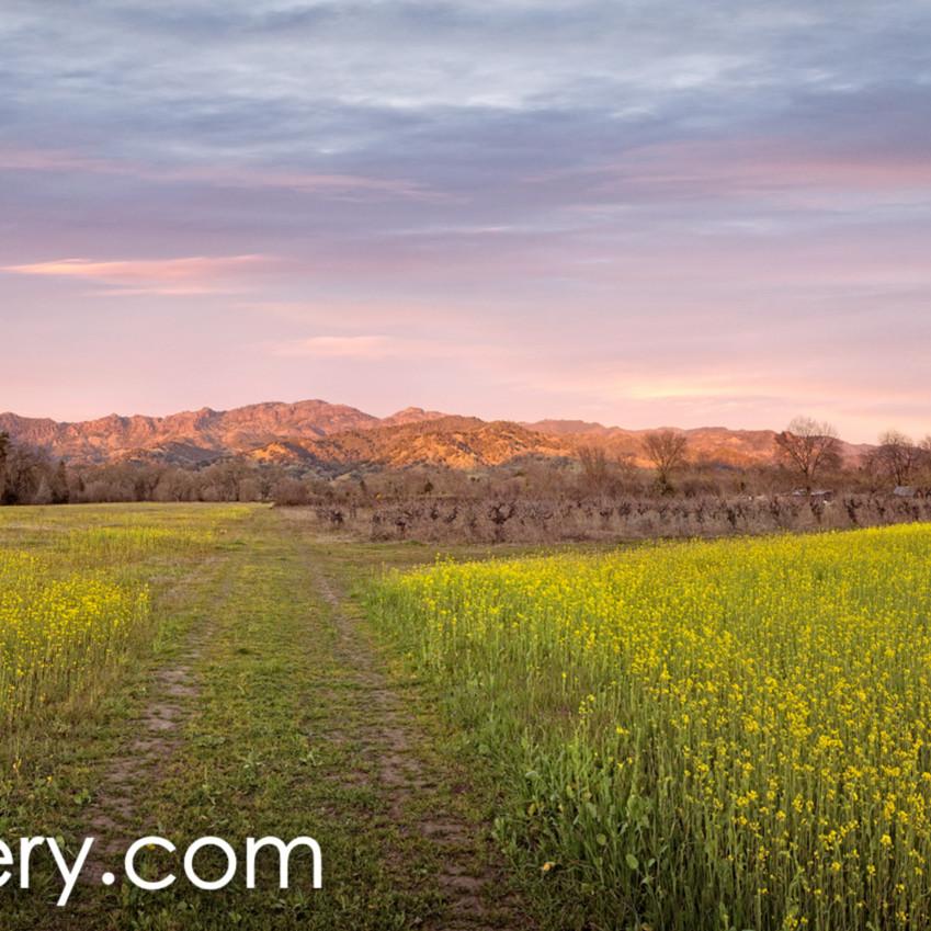 Calistoga spring panorama i6htwy
