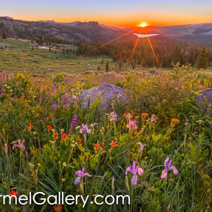 Wildflower panorama cbbaez