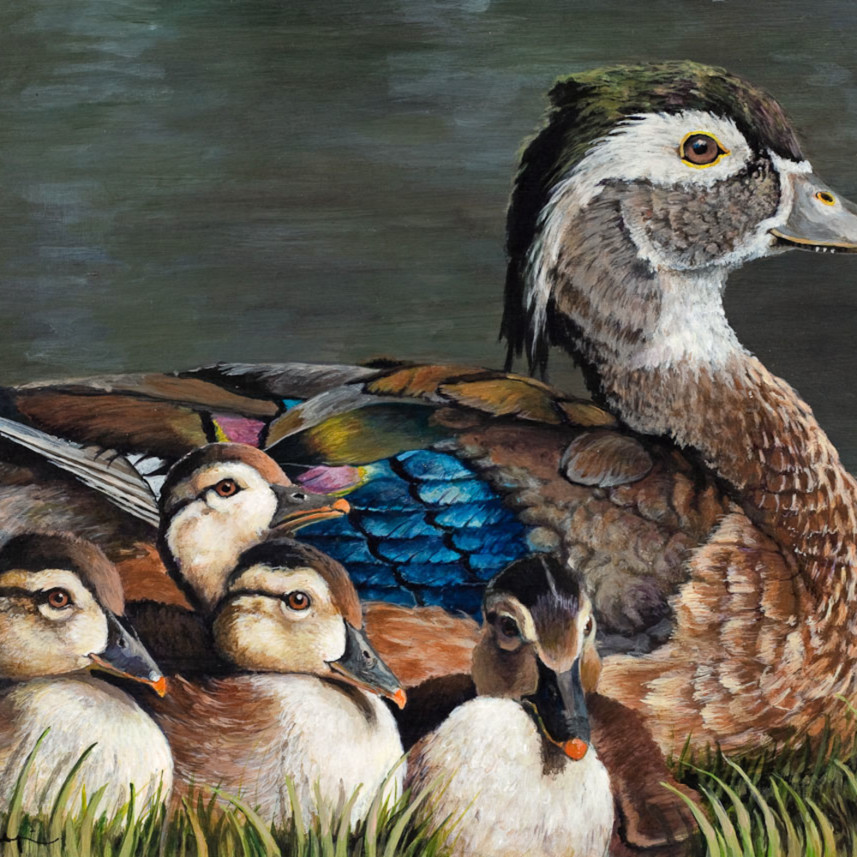 Wood duck with chicks lores ganjll