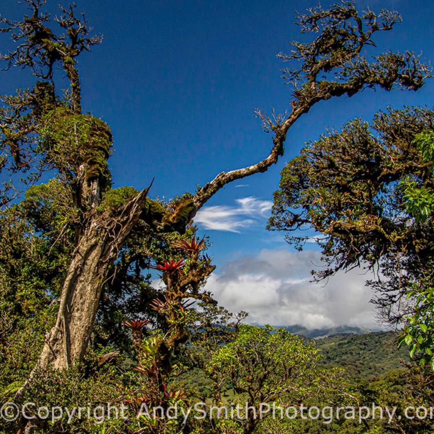 Treeincloudforestjas 200124  s9a1146 t3h2d6