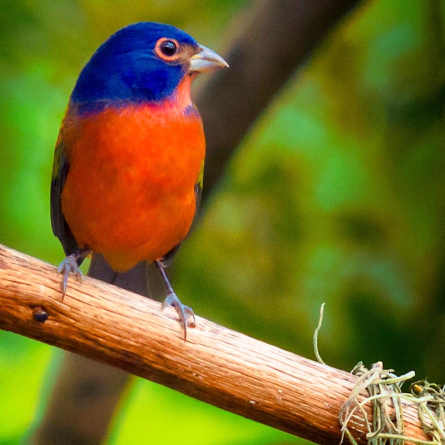 Backyard birds   sept 2019 20190914 1702 evd4er
