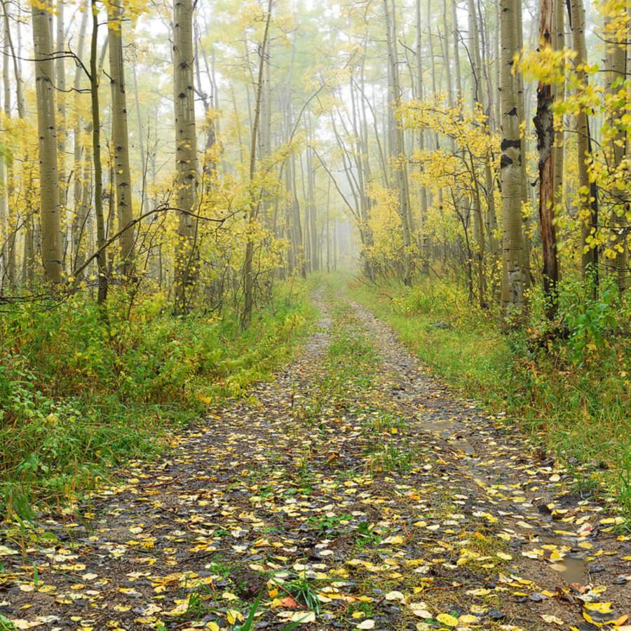 The unknown wasatch mountains utah autumn czylkh