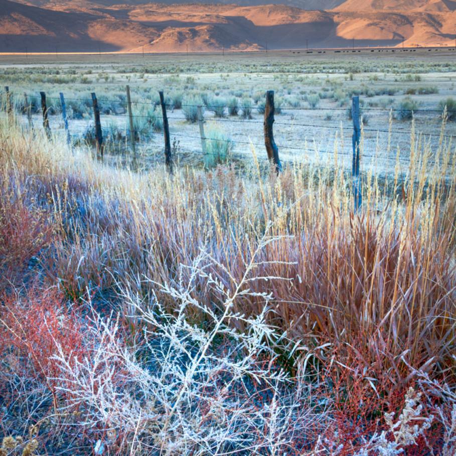 Autumn frost eastern sierra nvvoxb