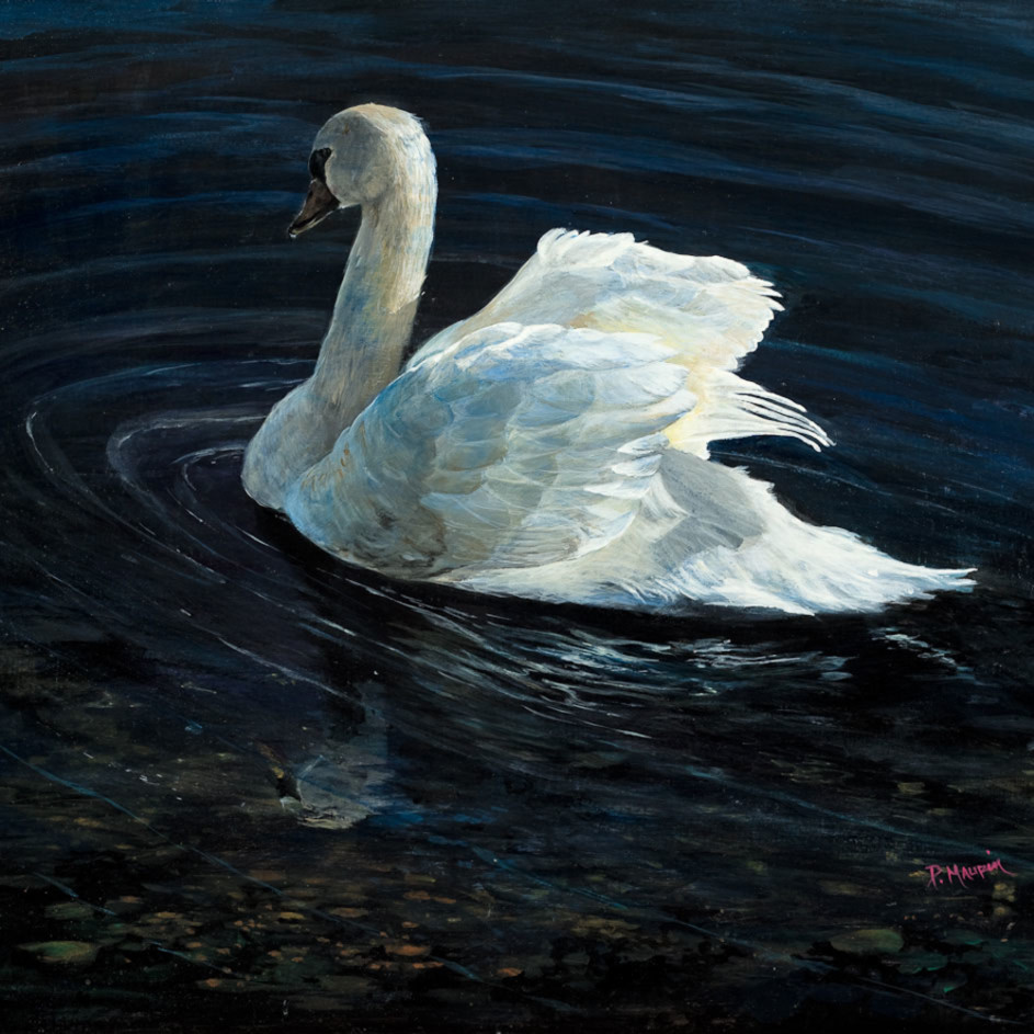Swan lores ynedjf