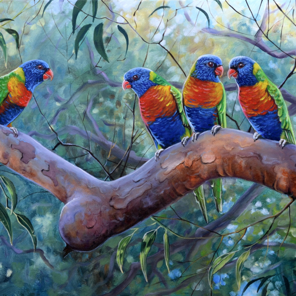 Angophoragossip rainbowlorikeetsebonyeditsocialmedia wgla6h