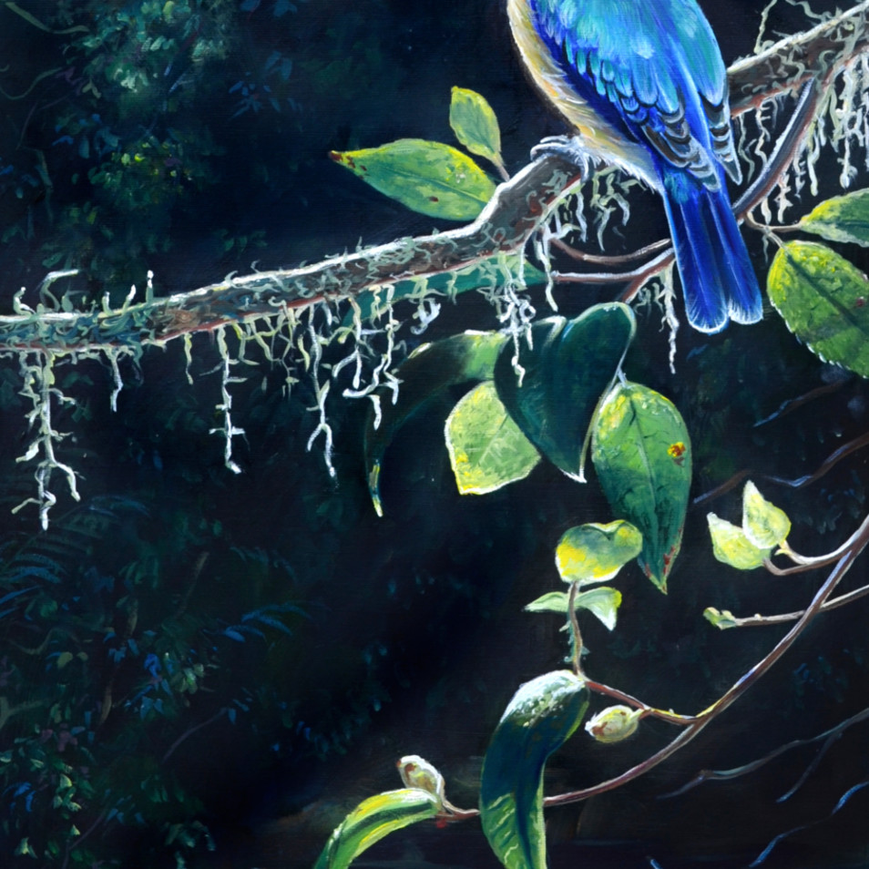Sacred kingfisher in the light socialmedia hi82tw