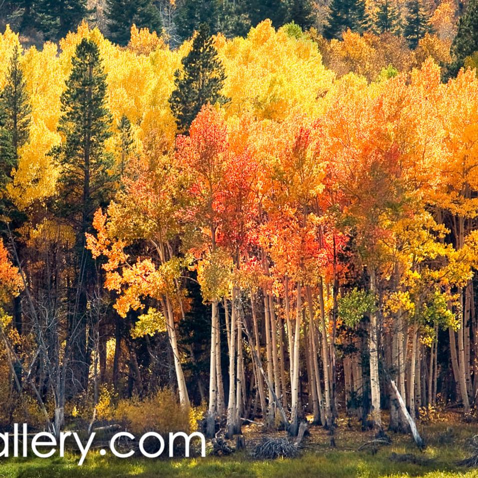 Lundy canyon autumn v2cp6l