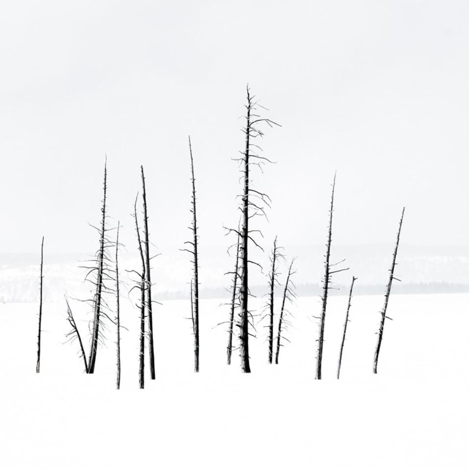 Drew campbell trees f99cjd